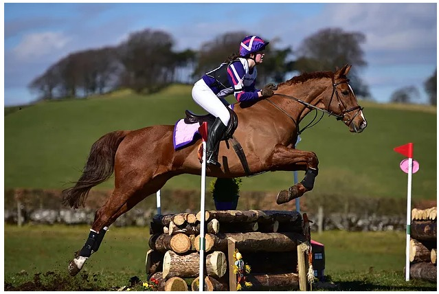 Why are Sports Massages good for my Horse or Dog McTimoney Horse Equine Dog Canine Sports Massage Worcestershire.jpg