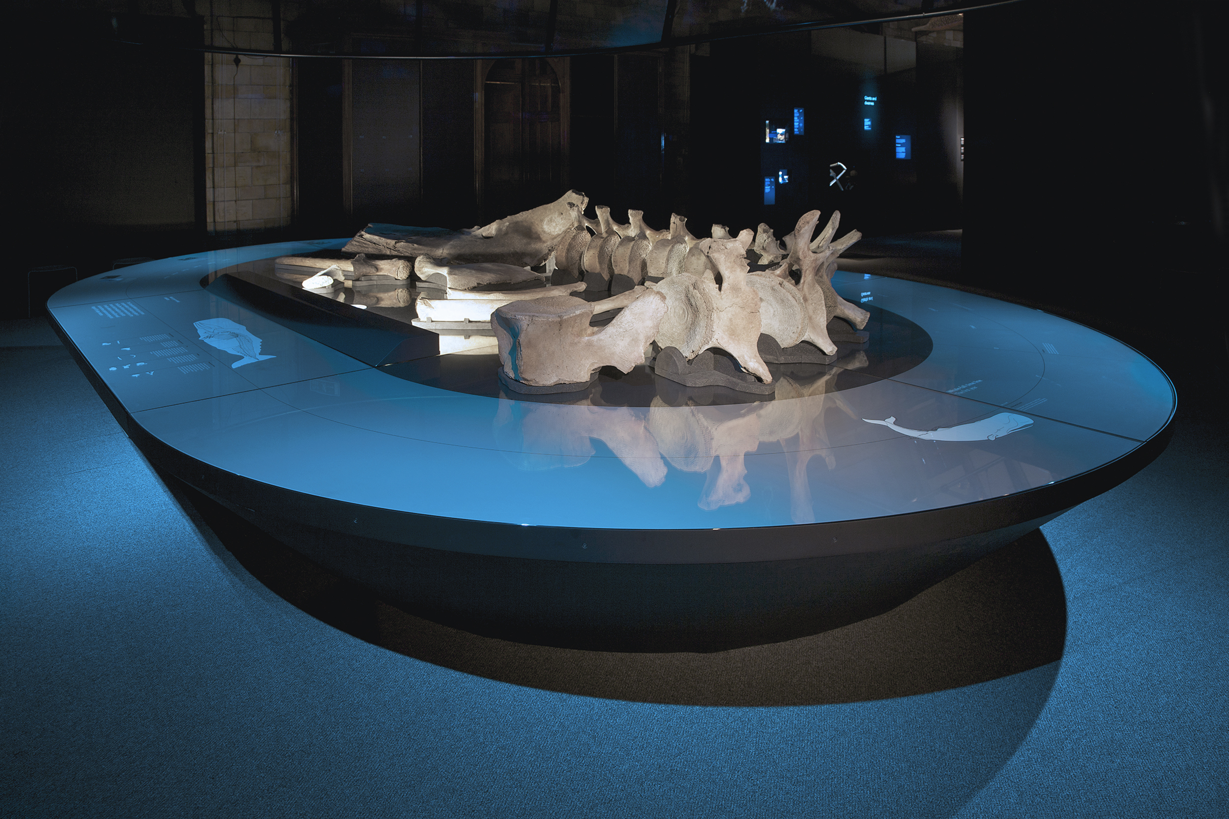 The Deep, Natural History Museum, Universal Design Studio / Bibliothèque