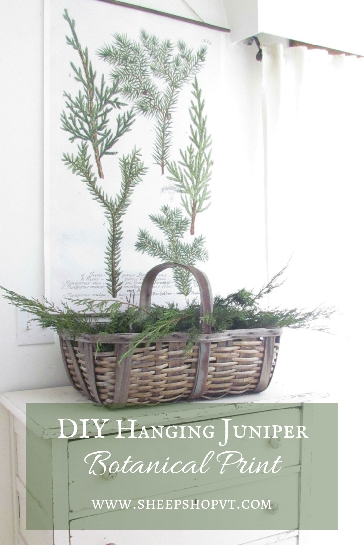 DIY Hanging Juniper Botanical Print.jpg