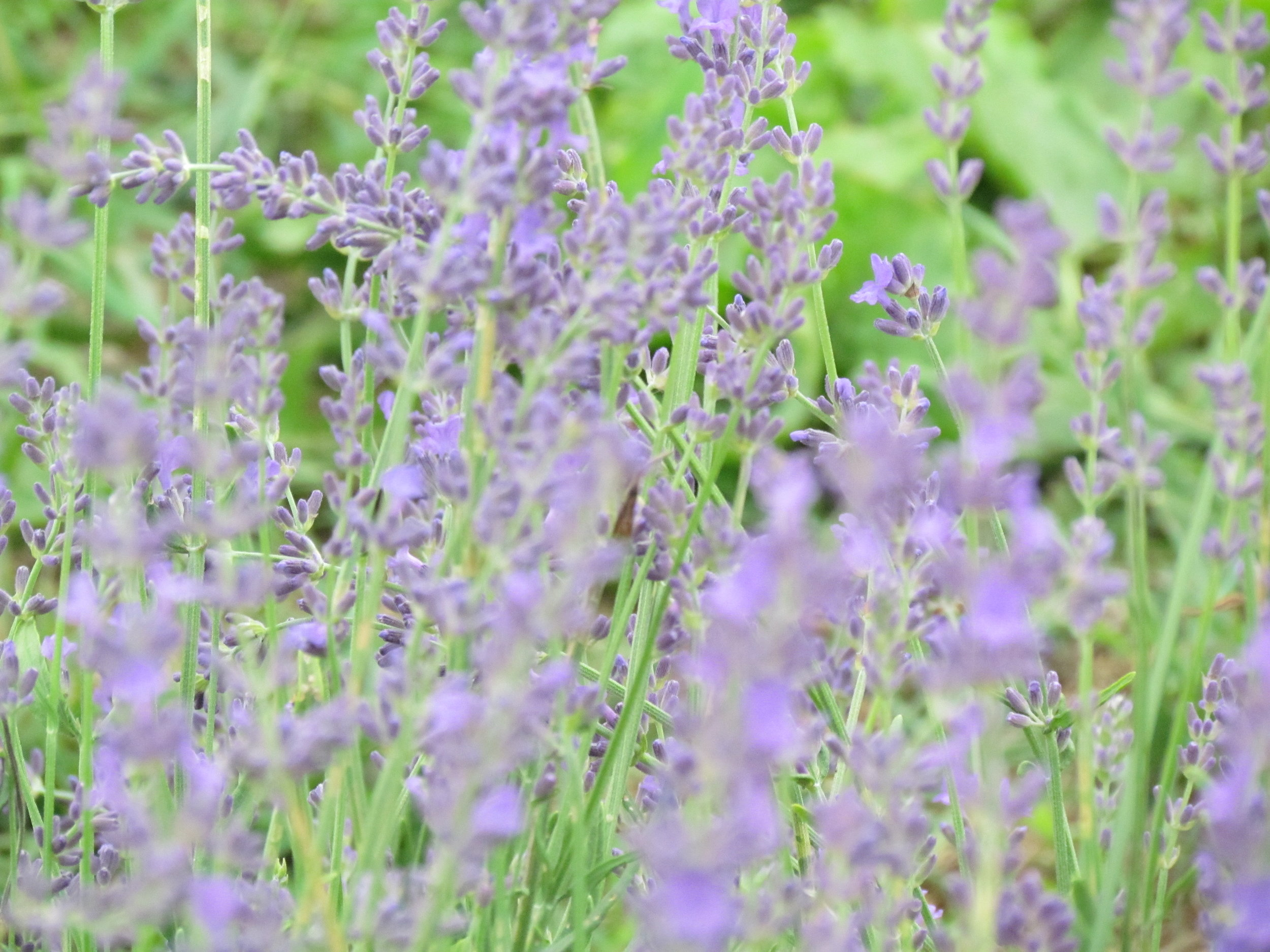 Our Relaxing English Lavender Collection