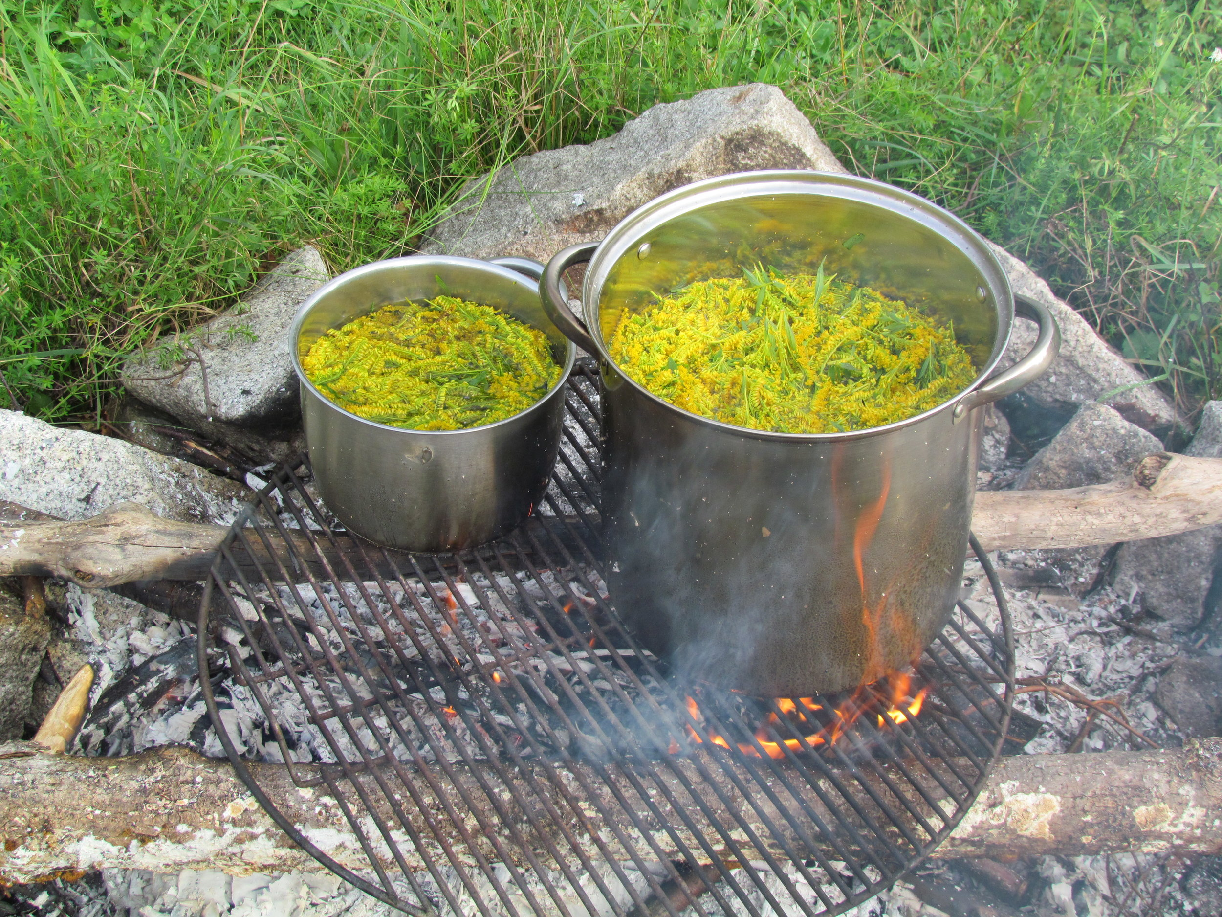 Dyeing Fabric With Goldenrod