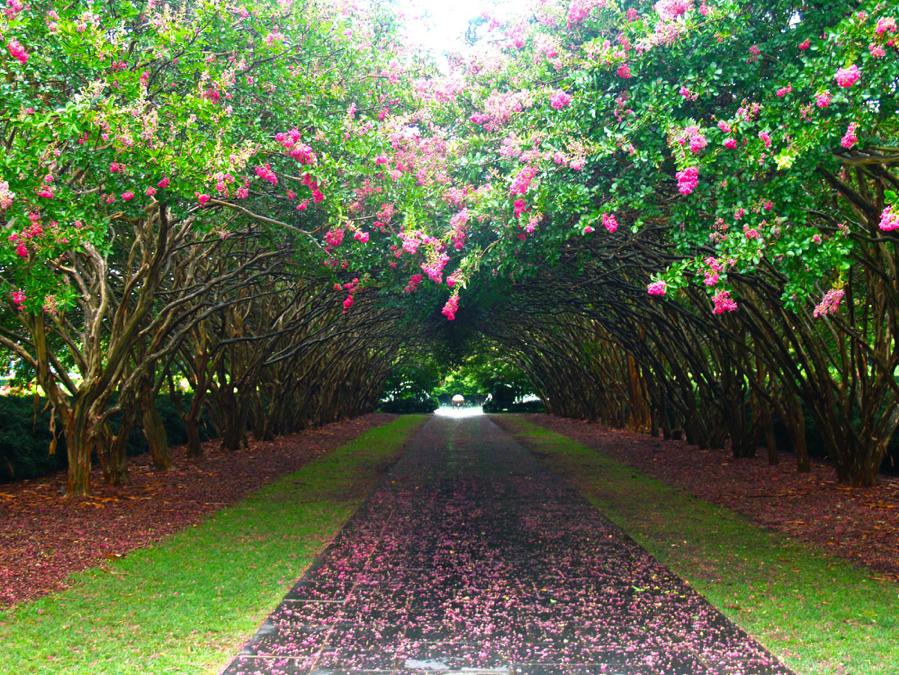 Photo Credit: Dallas Arboretum