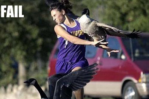 Birds Hitting Runner in Face - Funny Running Fail for JamesRunsFar.com 1.jpg
