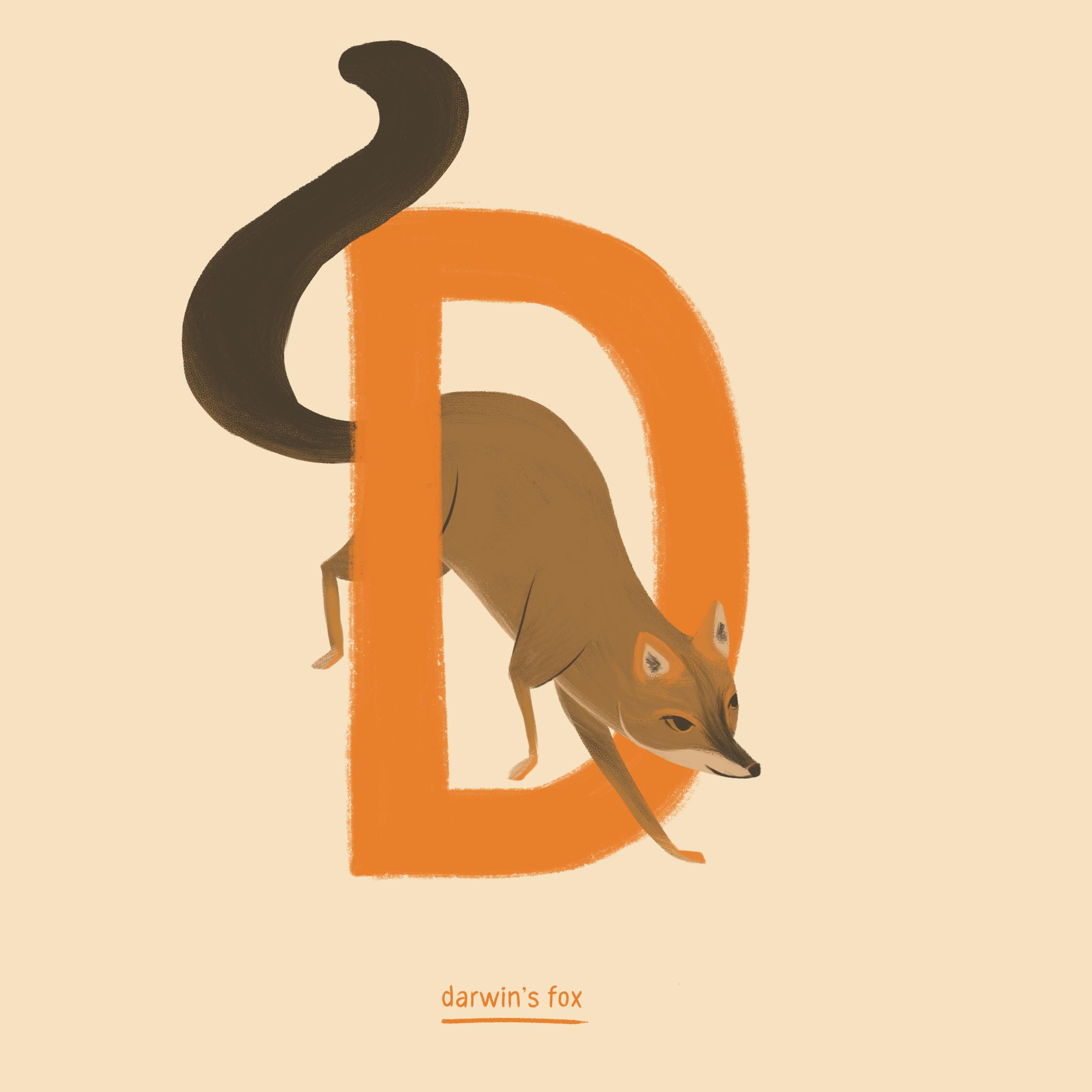 Darwins fox.png