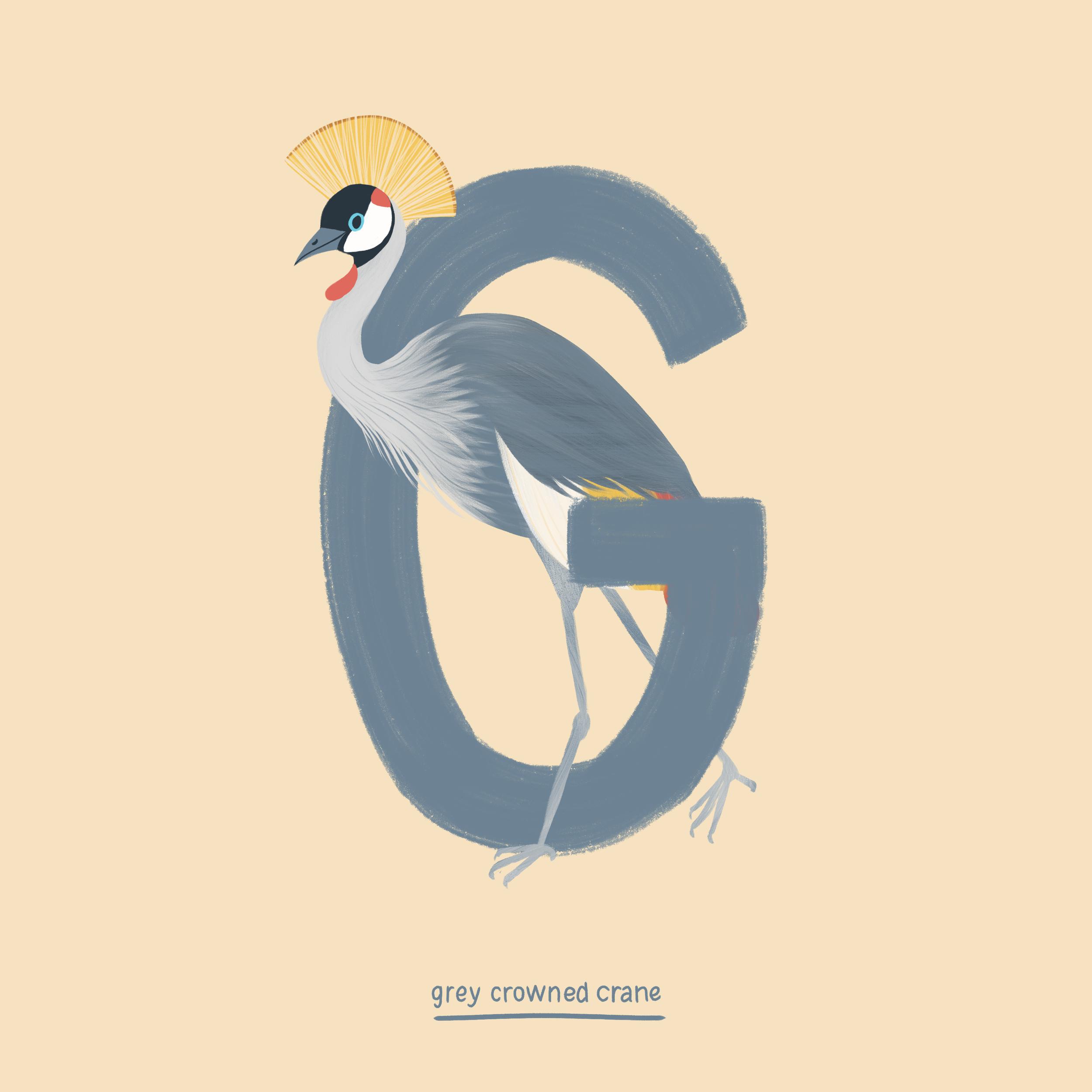 Grey Crowned Crane.png