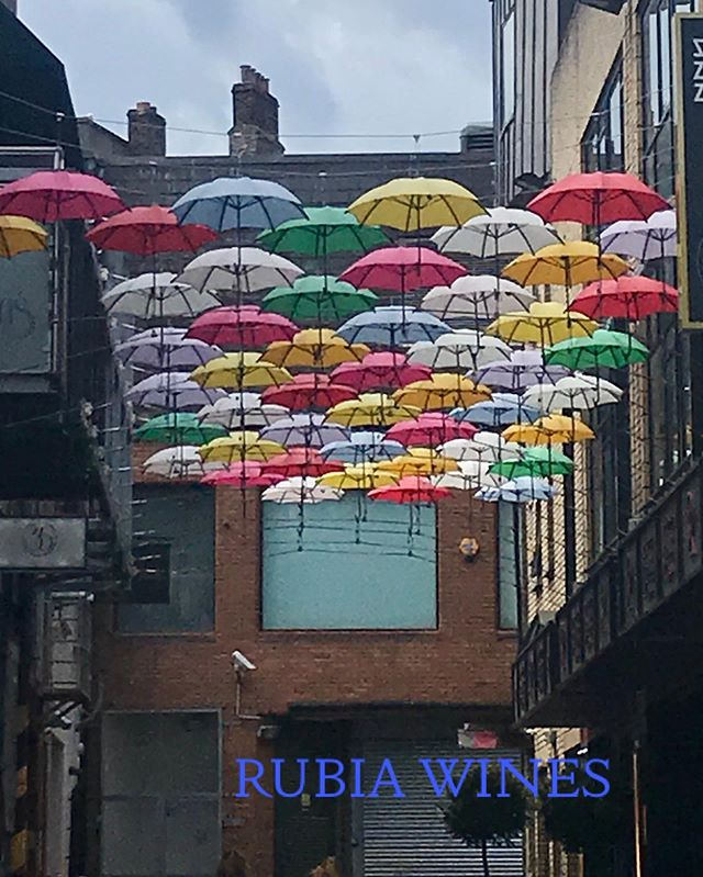 Keeping @rubiawines dry in @dublin this morning with the help of a couple of umbrellas!  #rubiawines #weekendtrip #dublin #rain #umbrellas #newwineproject #yountvillelife #rubiawineslifestyle #napavalleywines #wines #boutiquewines