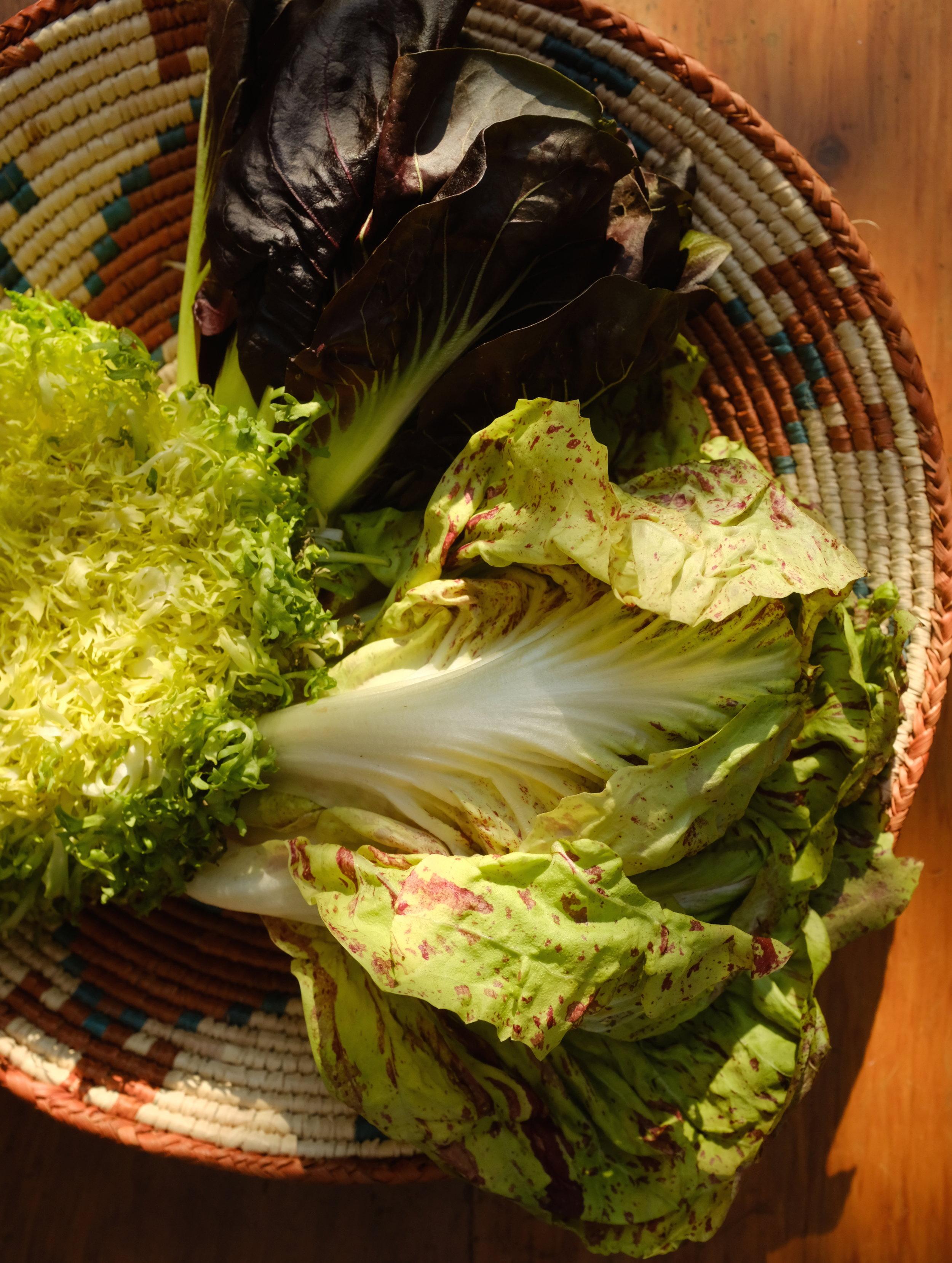 lettucesDSCF0014.JPG