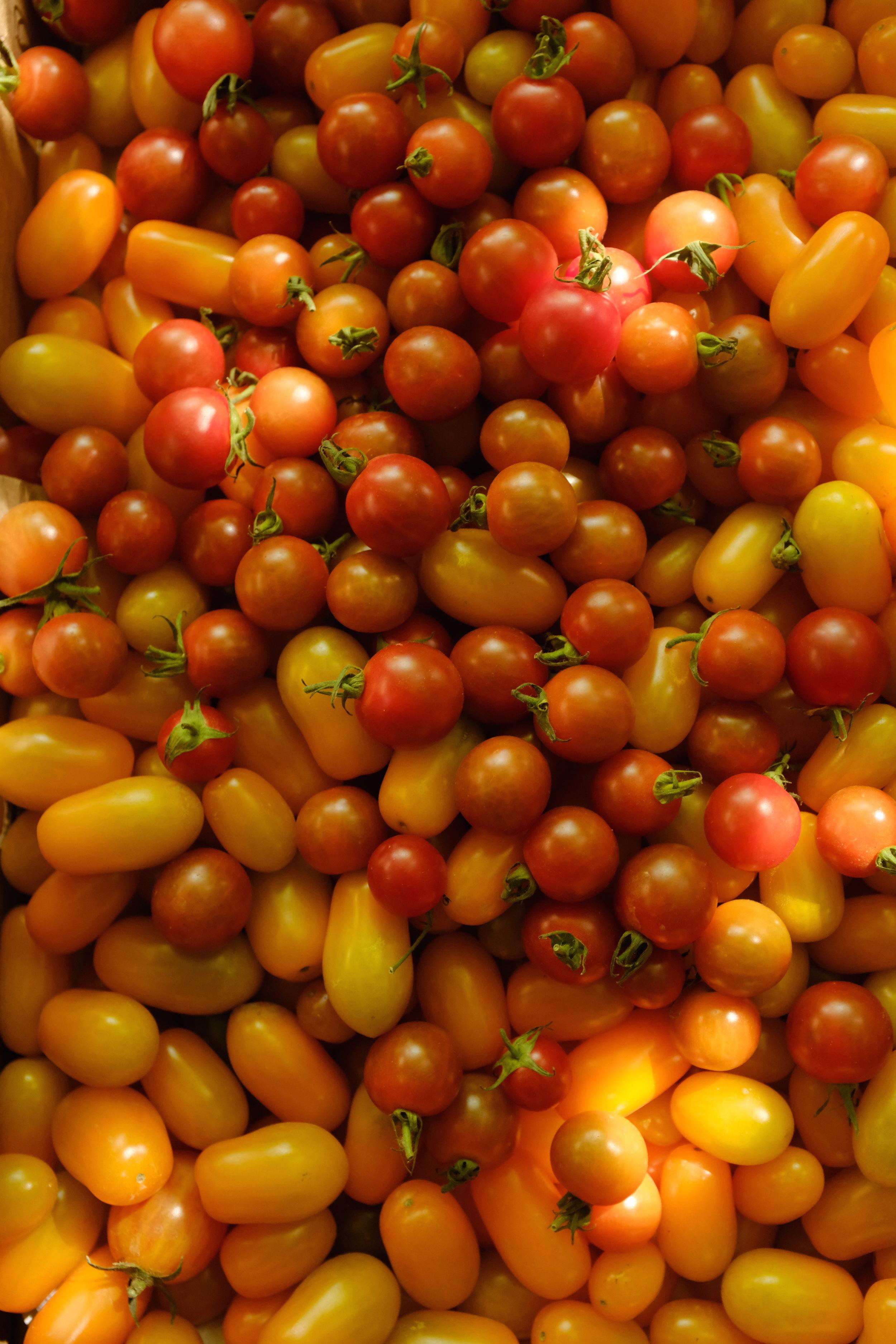 tomatoesDSCF2205.JPG