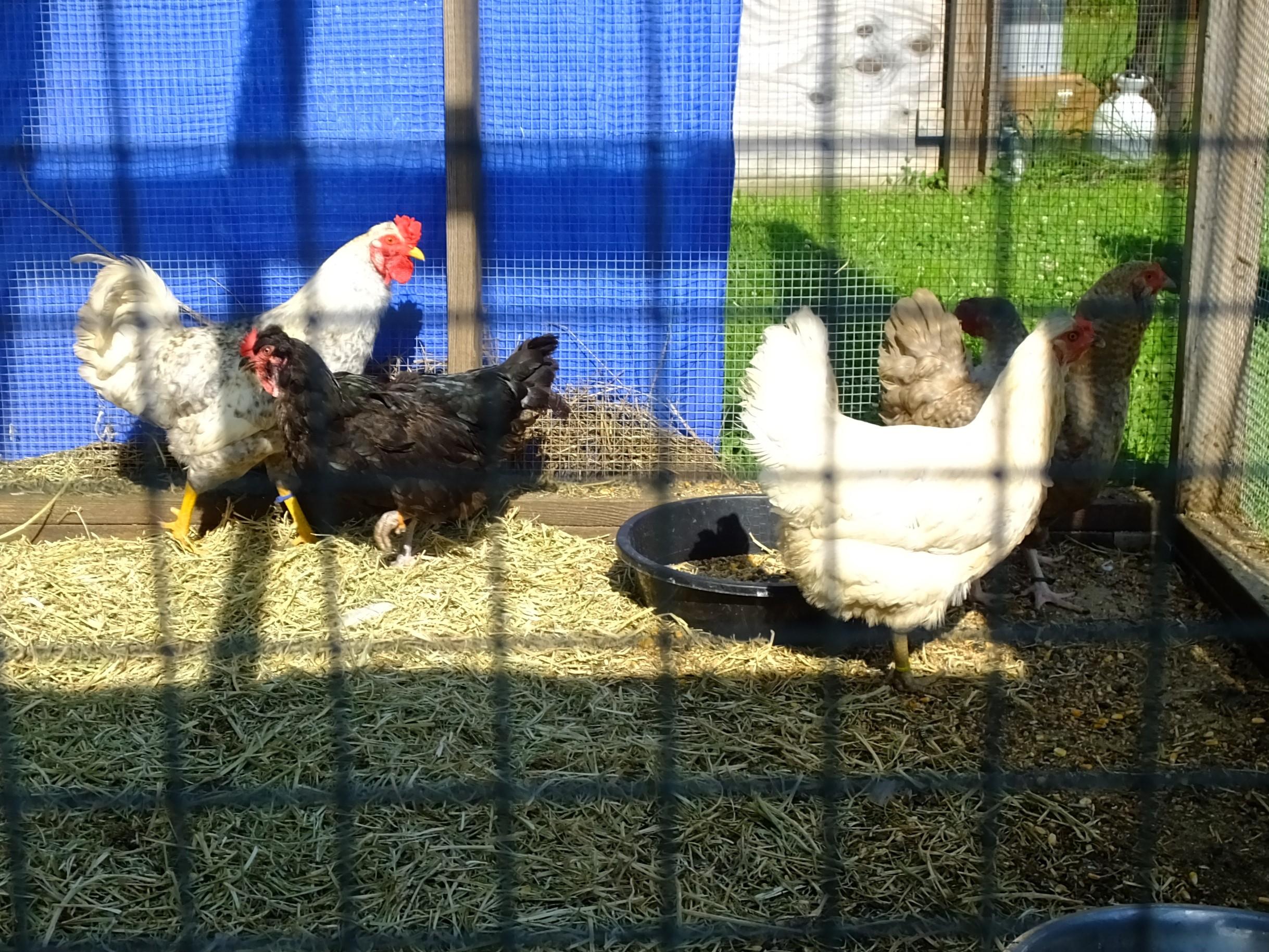 Five flock (5).JPG