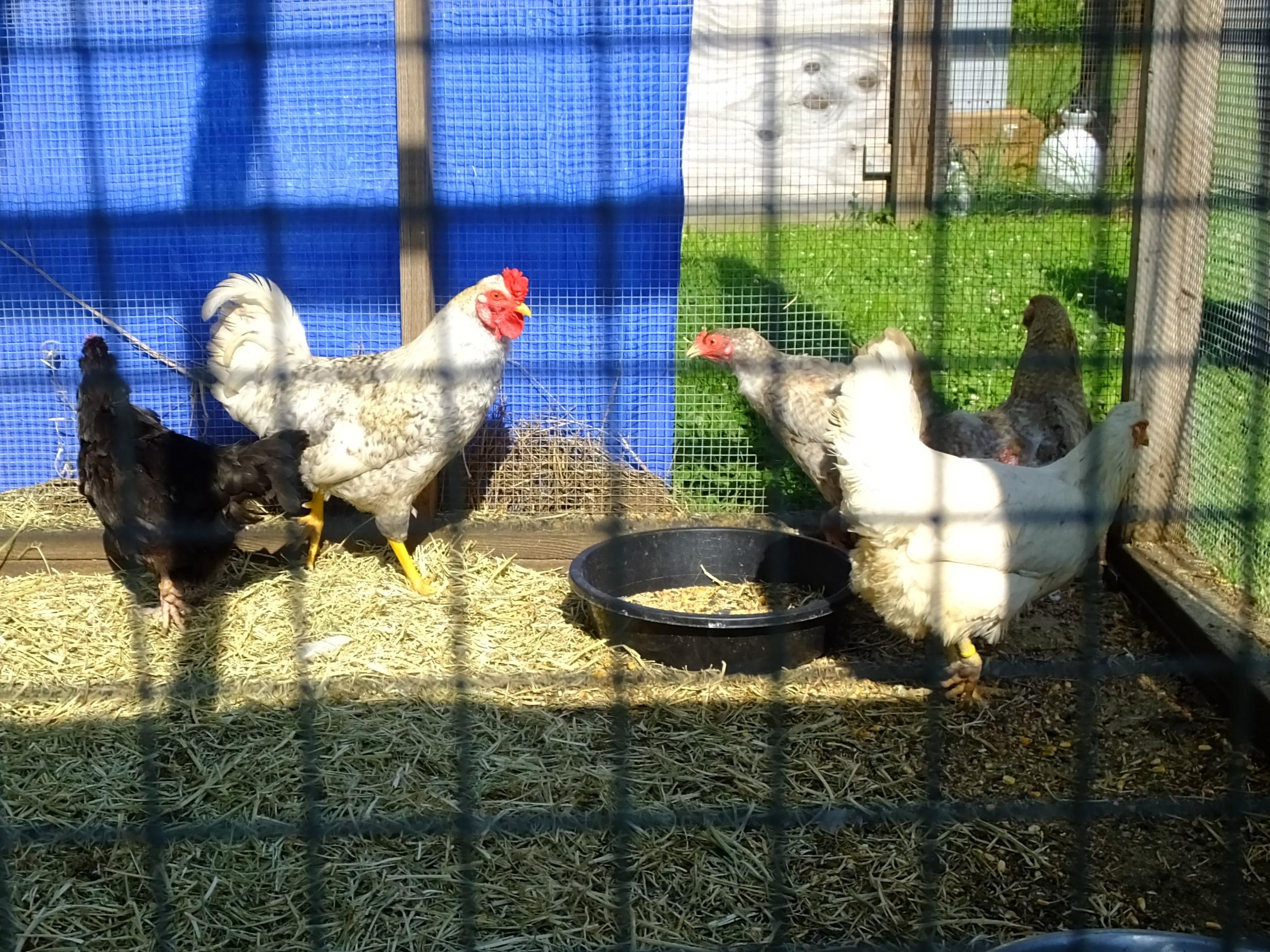 Five flock (7).JPG