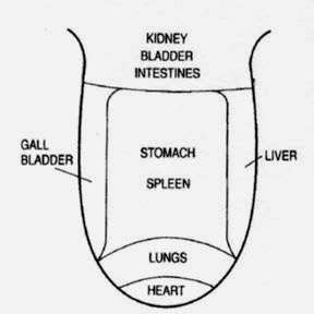 diagnosis-of-tongue.jpg