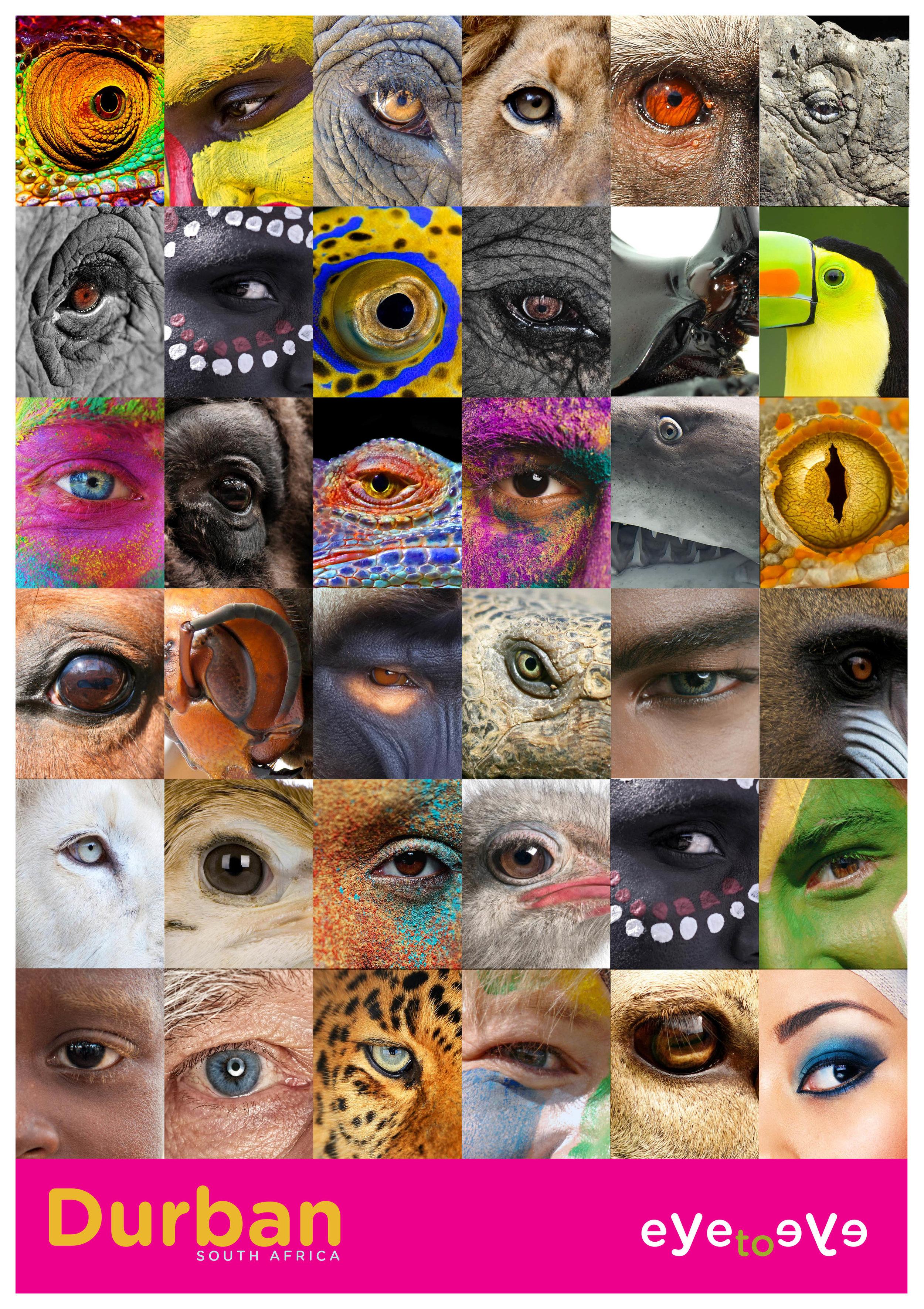 eye to eyeA.jpg