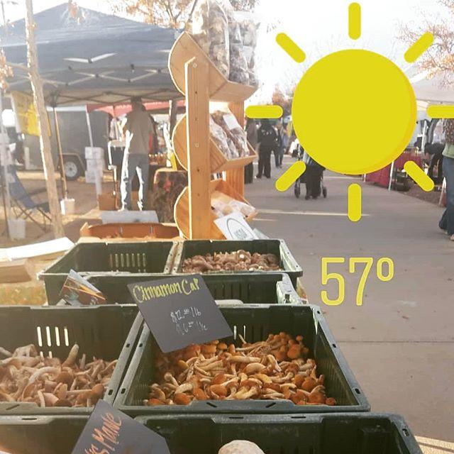 Another beautiful day at @longmontfarmersmarket come visit us! Last market day is November 17th! #mushrooms #farmersmarket #bouldercolorado #longmont #longmontcolorado #fortcollins #northerncolorado #coloradofood #colorado #vegan #superfood #healthy #coloradofoodie #gourmetmushrooms #coloradolocal #windsorcolorado #foodie #bouldervegan #coloradofarmers #milehighcity