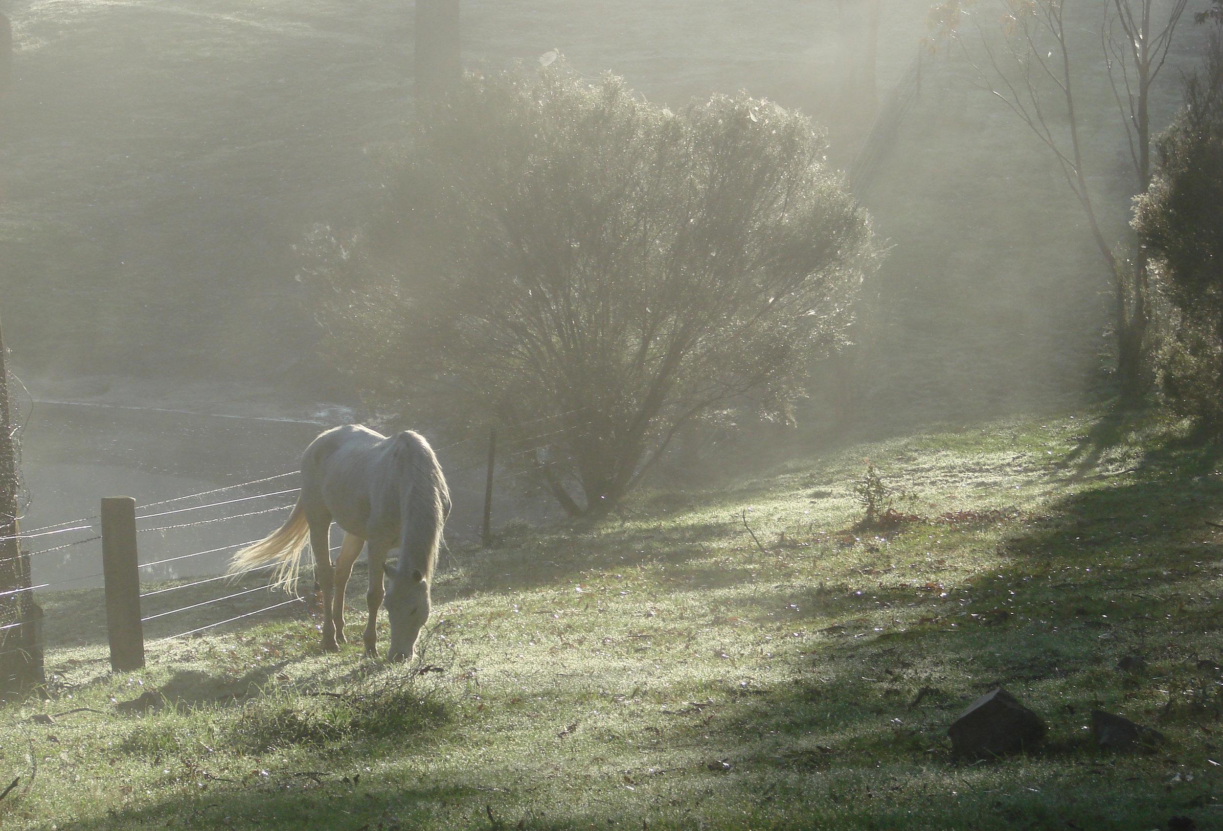 early morning horse 2.jpg