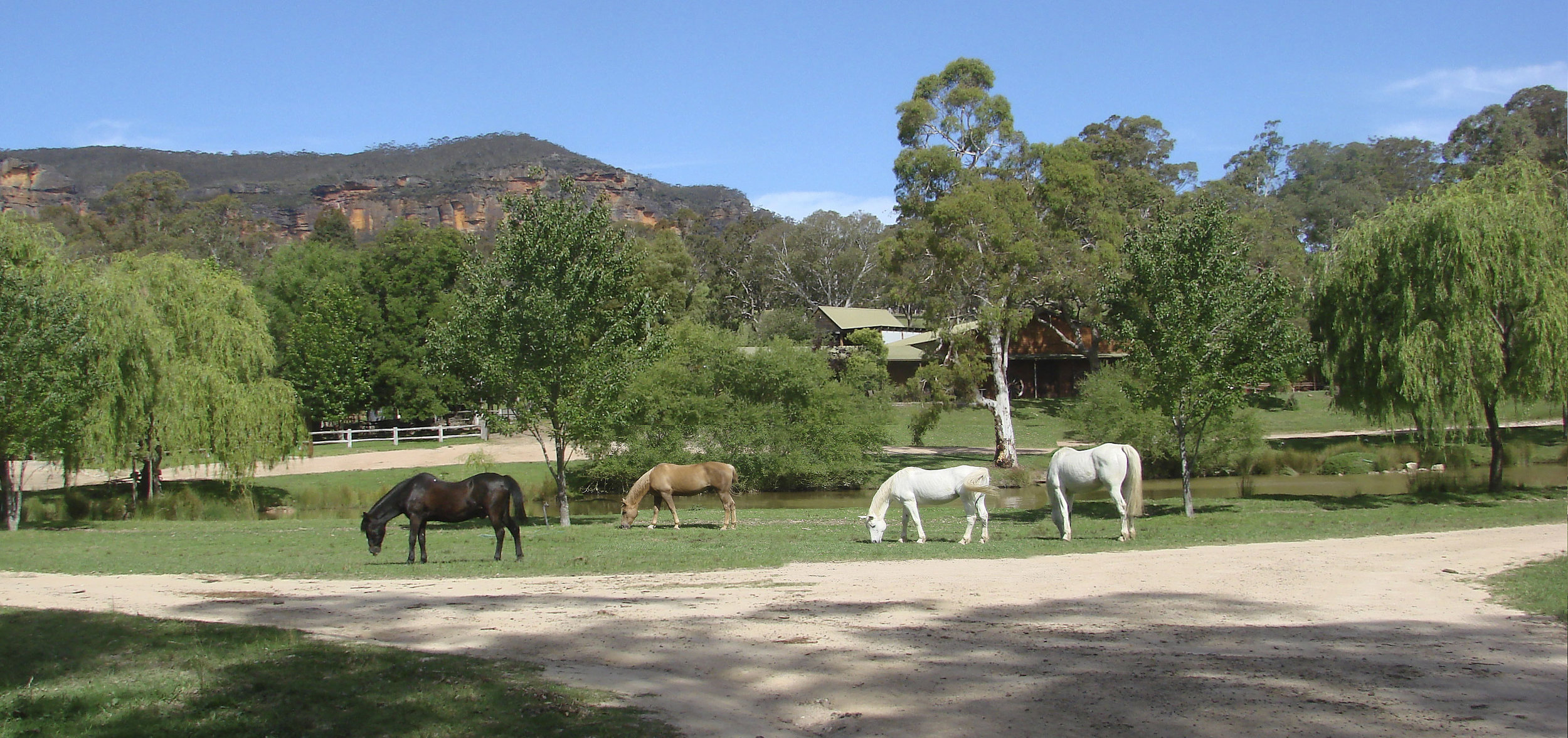 horses grazing at front.jpg