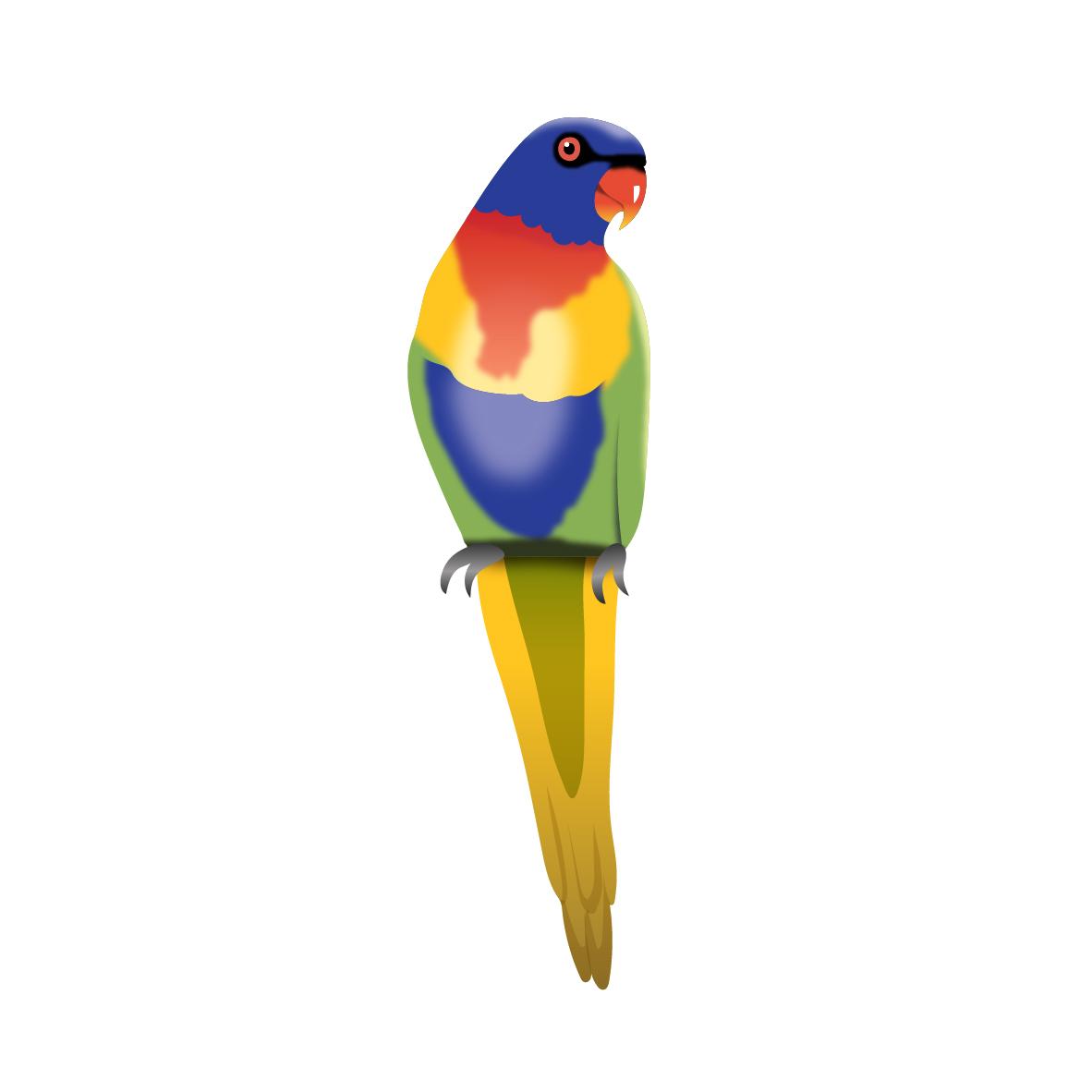 CSCC_Darnum_Parrot_RGB.jpg