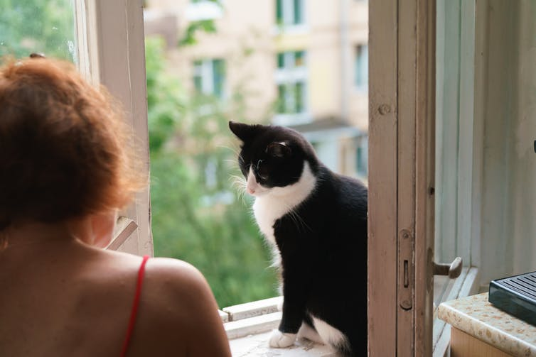 Energy efficiency cat says 'close the window!'. Shutterstock.
