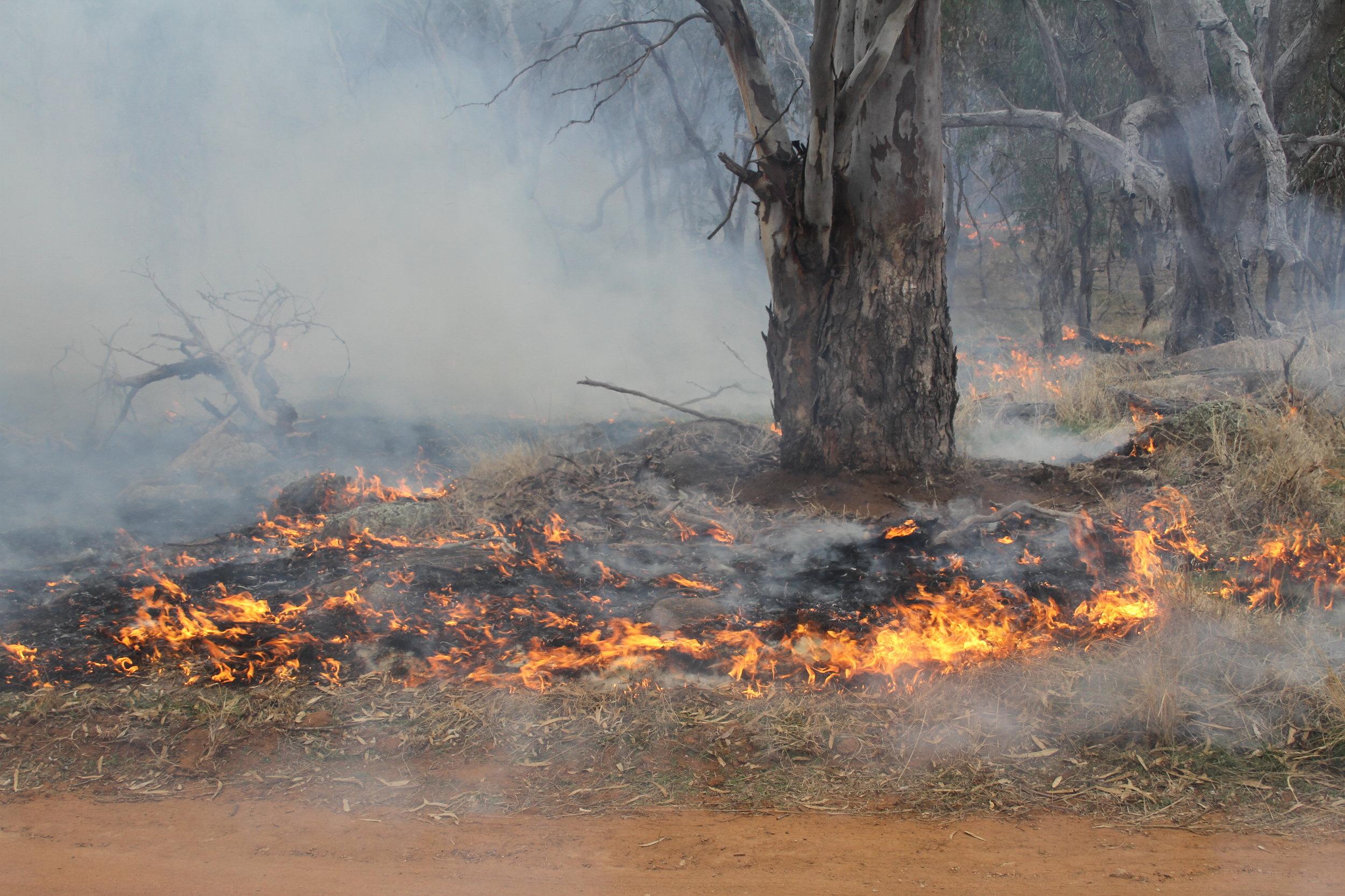 A recent cultural burn on Dja Dja Wurrung Country. Photo: Rafe Pfitzner.