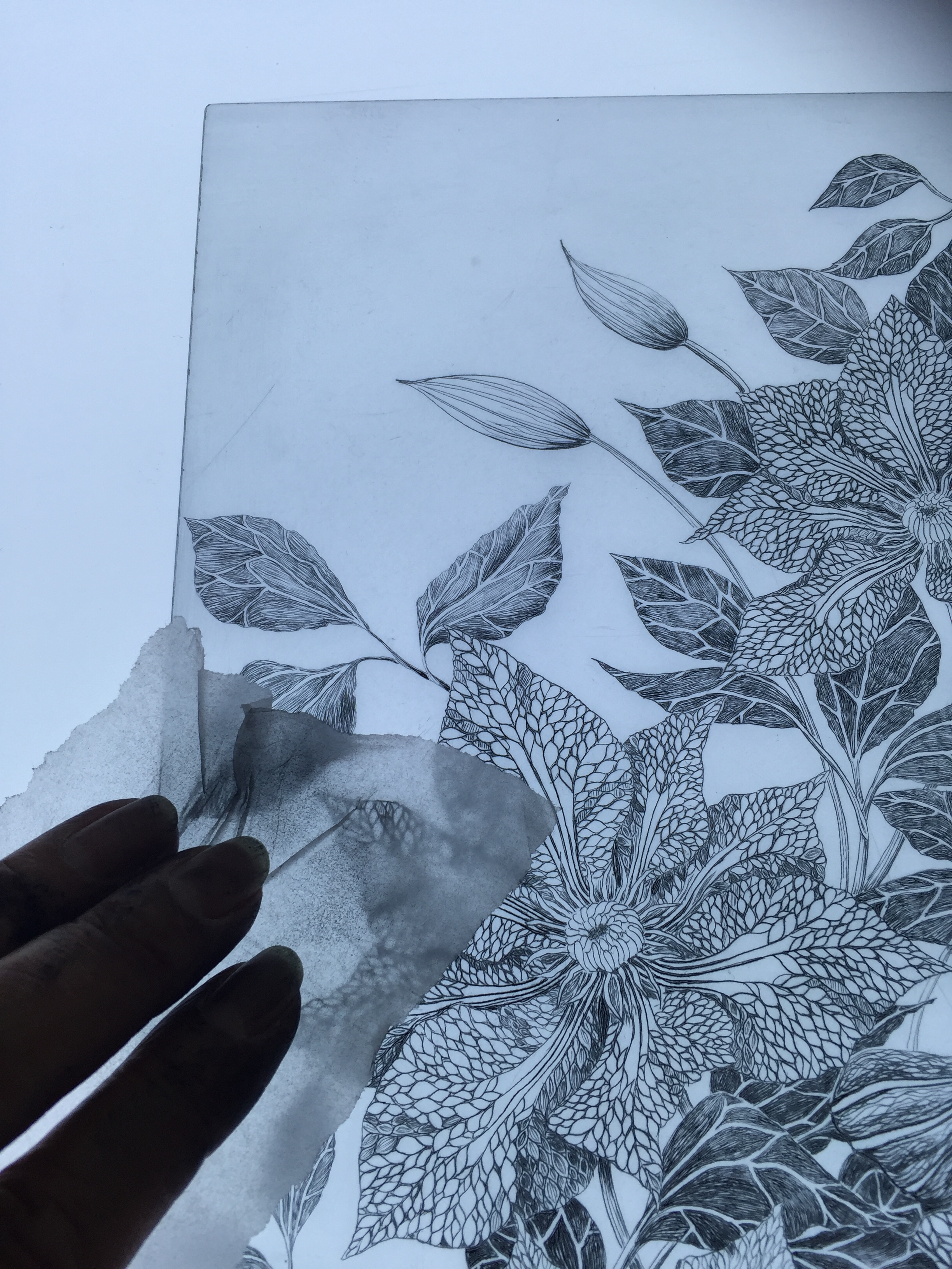 Final wipe of a drypoint plate