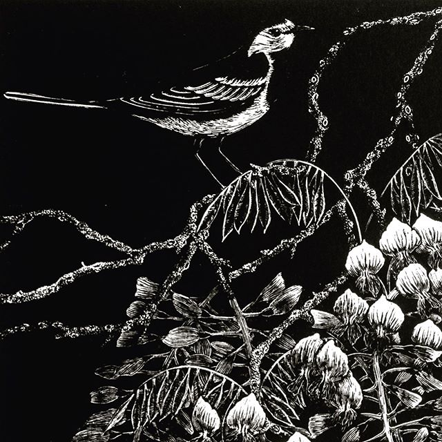 Detail of my wood engraving, Wagtails and Wisteria, now showing in the Society of Wood Engravers exhibition at the Penwith Gallery in St Ives until 20th July #woodengraving #printmaking #reliefprint #penwithgallery #societyofwoodengravers #stives #artexhibition