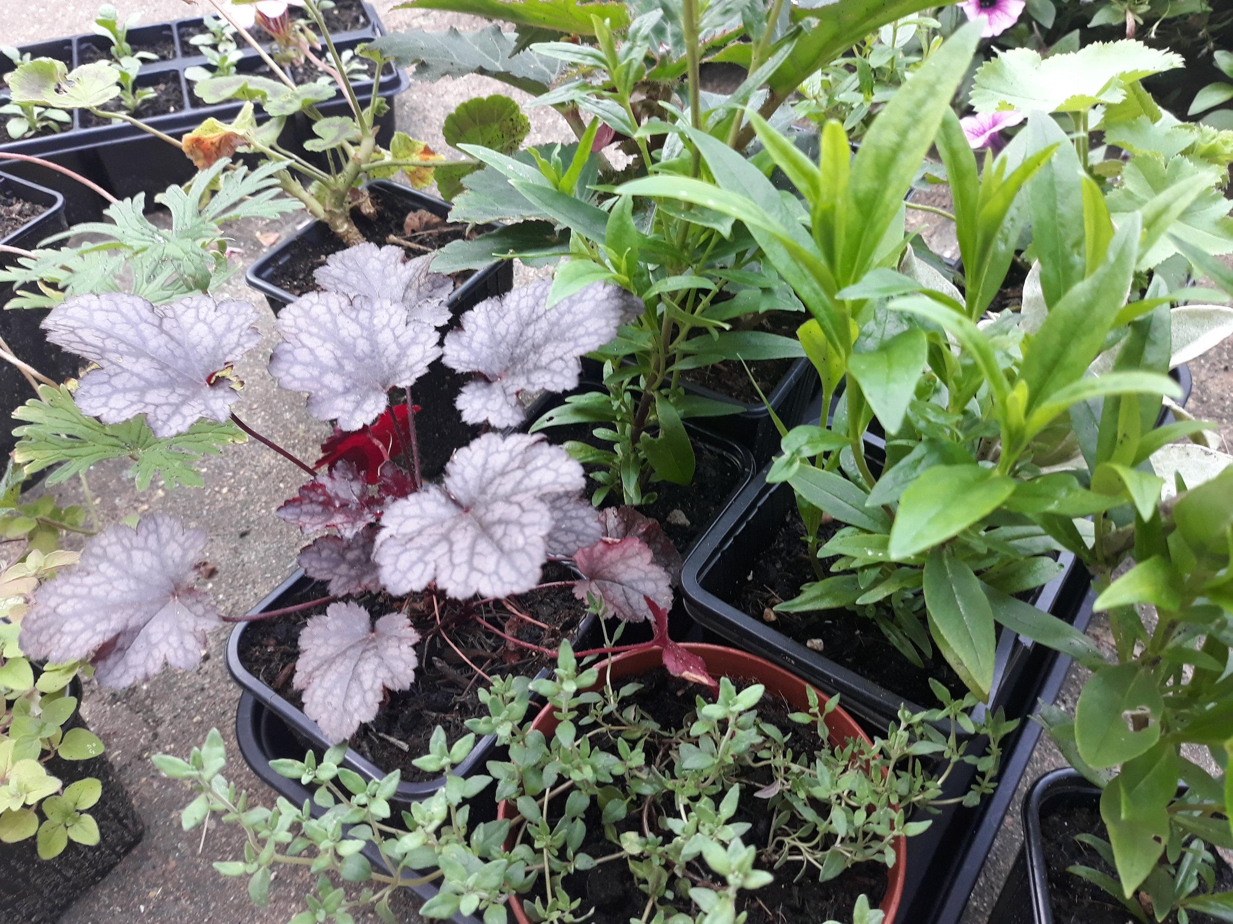 Plant pics.jpg