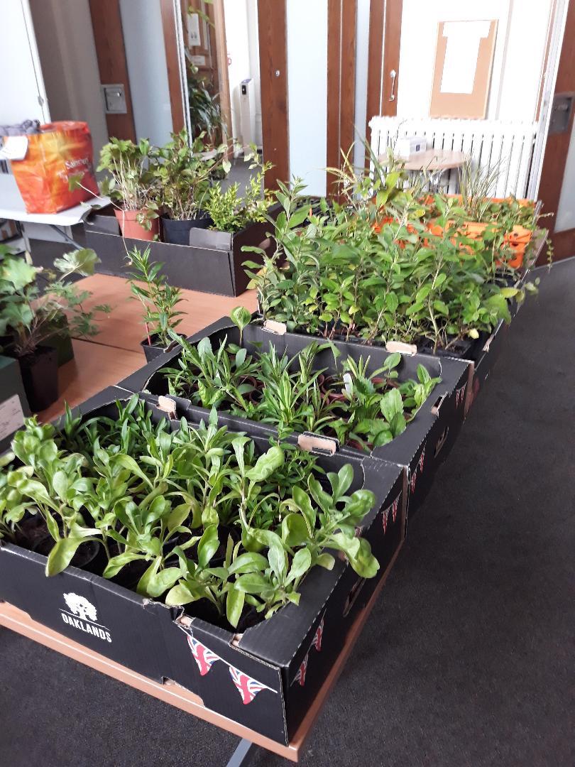 plant pics 3.jpg