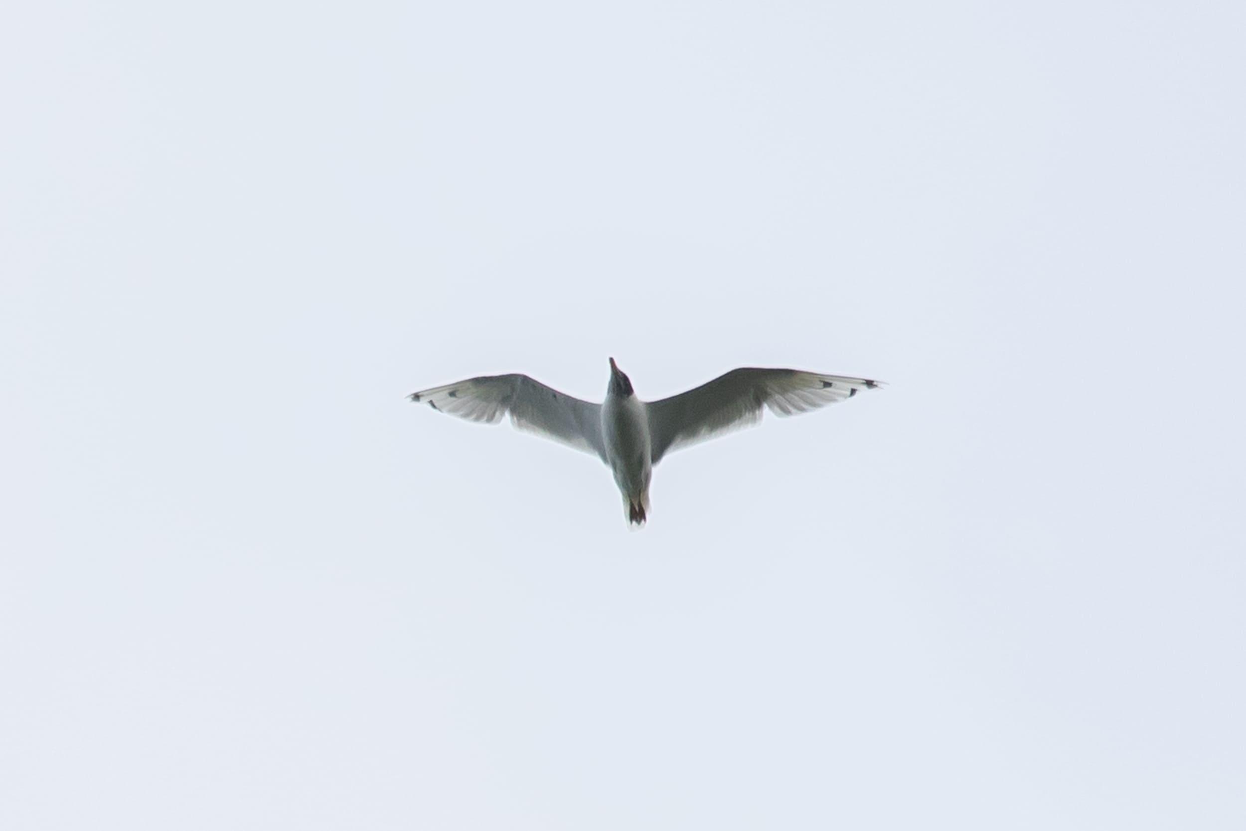 20180823-100,000 Birds-05-Web.jpg