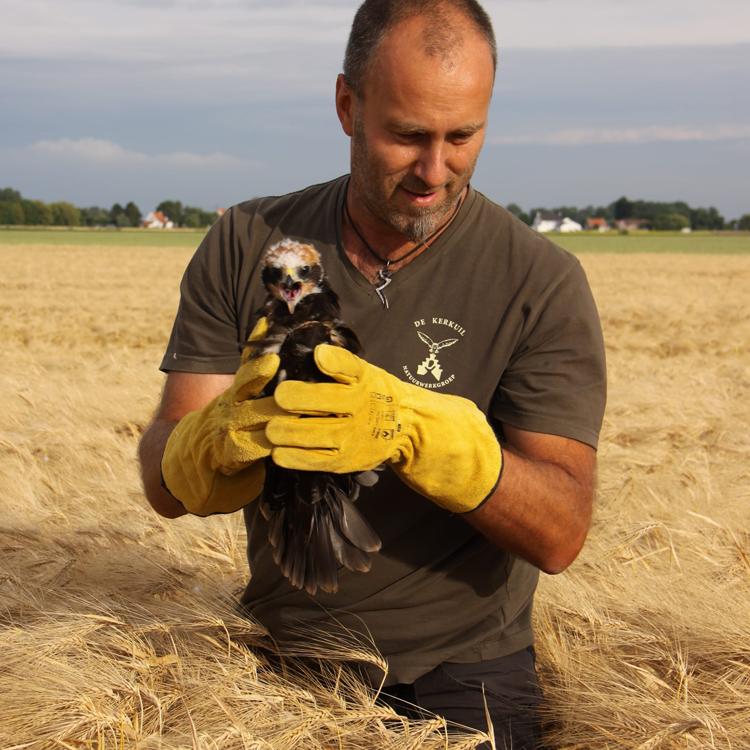 Wim Bovens - Belgium (2018 - now)Webmaster & Birdfairs