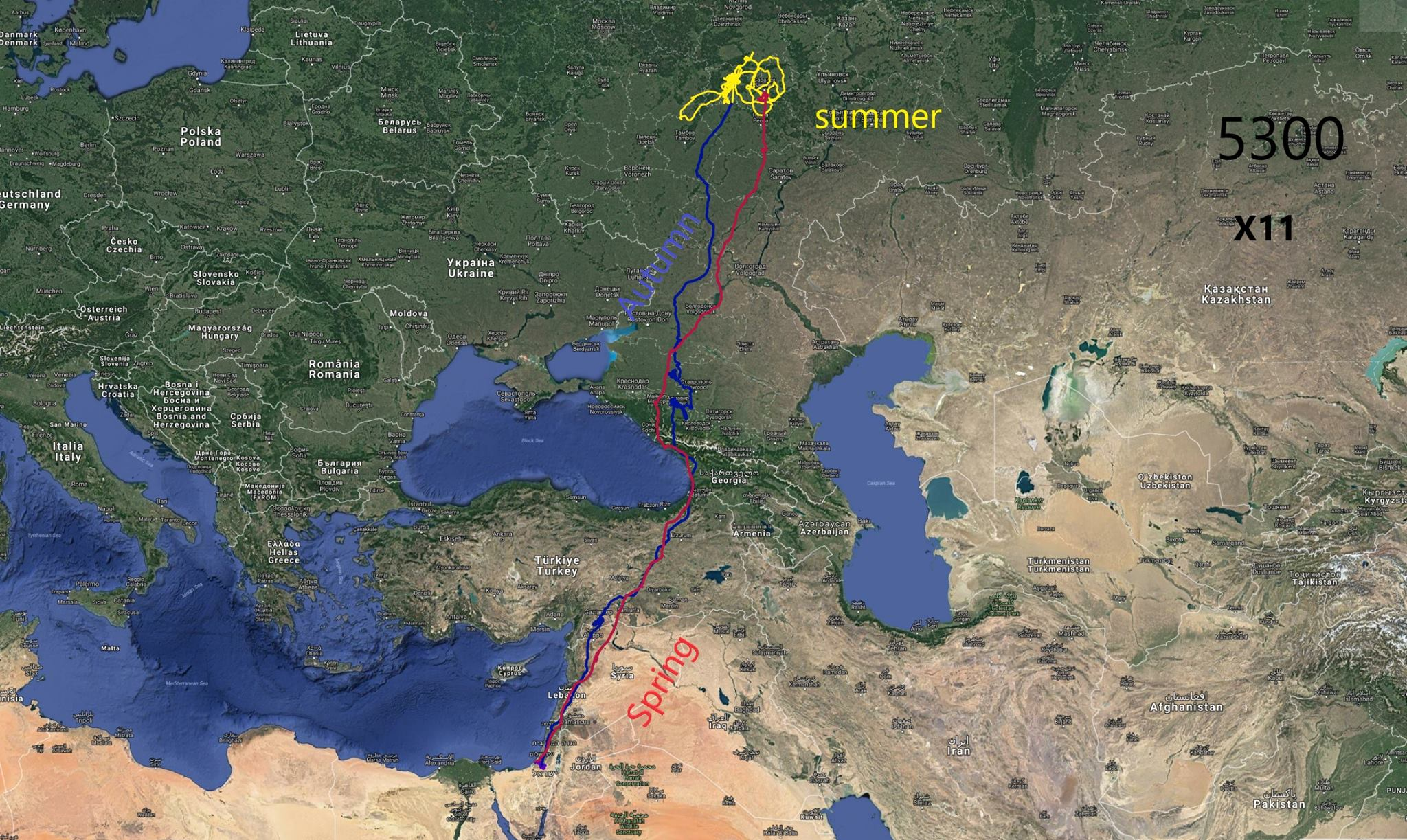 GPS track of one of Daniel Berkowic' Black Kites, clearly showing that birds wintering in the Negev could end up moving through the Batumi bottleneck on spring and autumn migration.