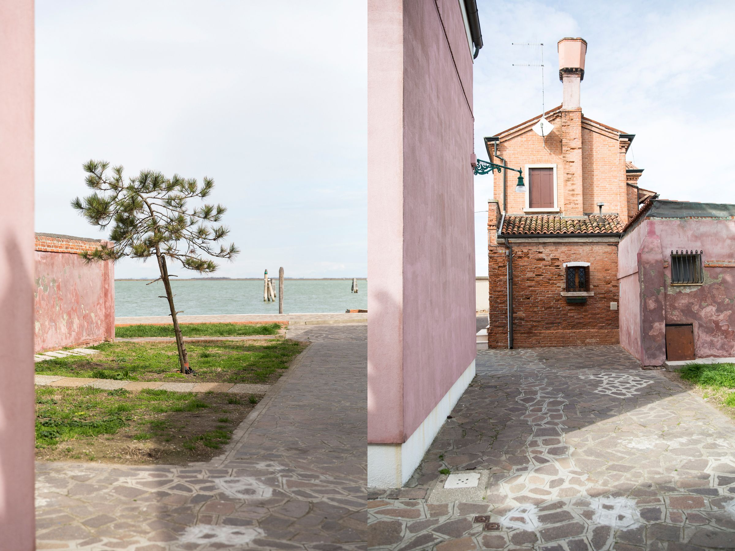 Venice Burano Pink Tree DPS .jpg