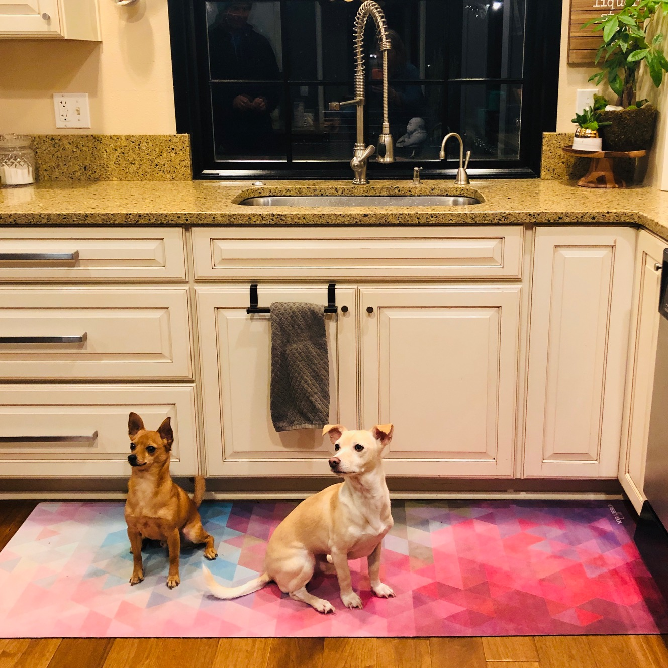 Why is there a mat in front of the sink? - and, ye s— the two dogs are the cutest!