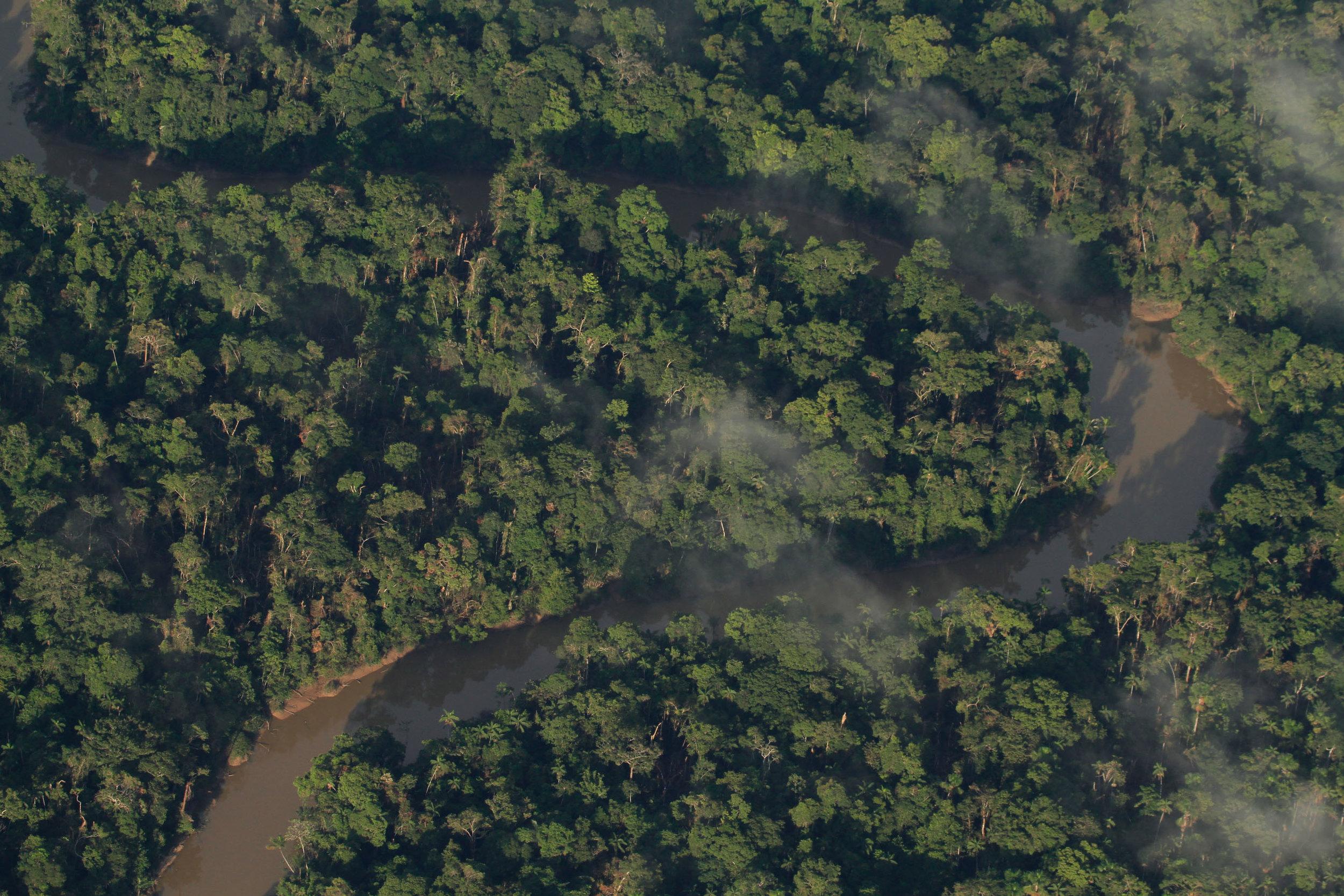 AMAZONIAN TREES -