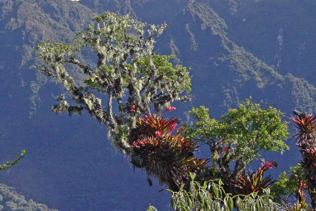 ENDEMIC PLANTS -