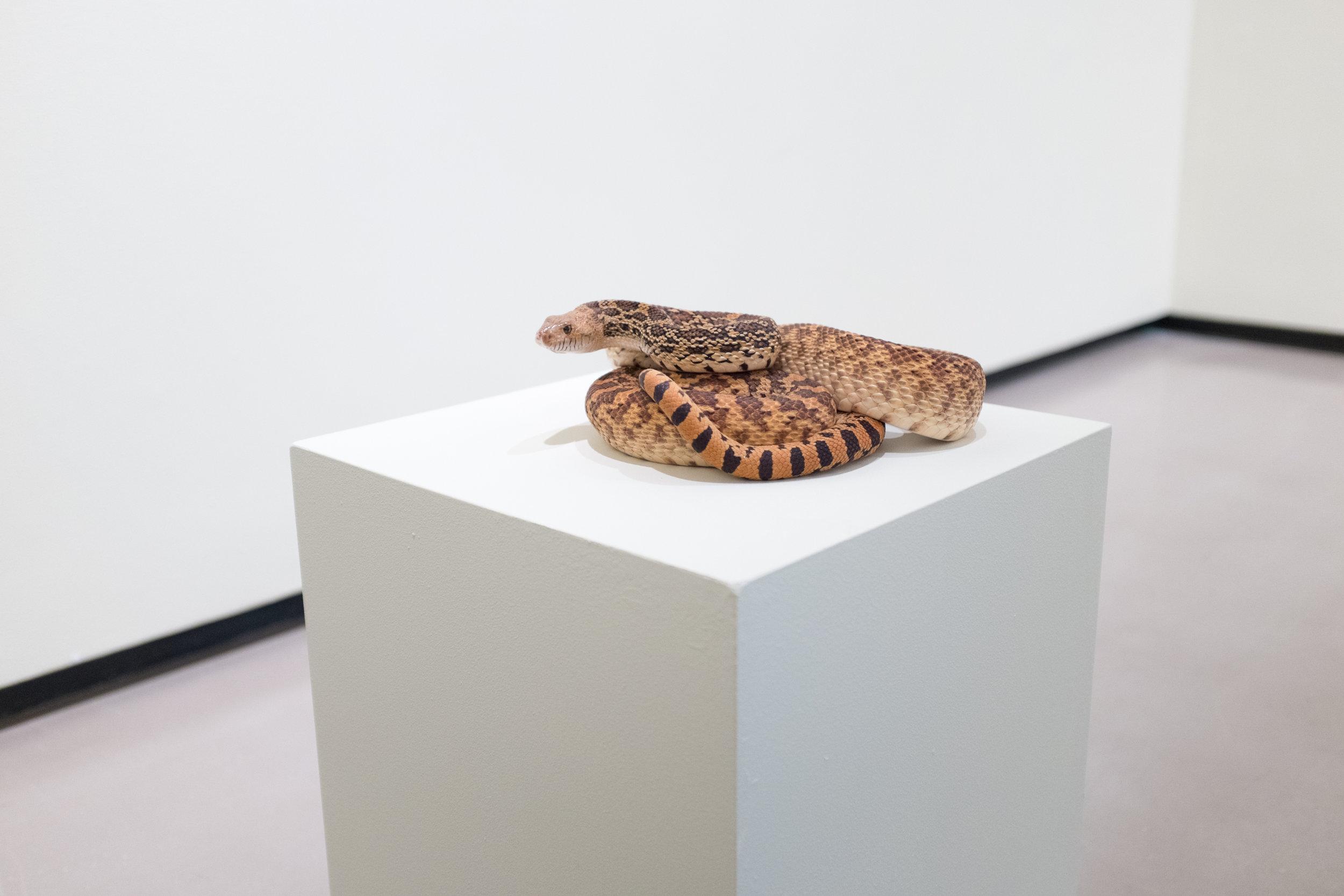 naturalia_joo_hustwit_snake.jpg
