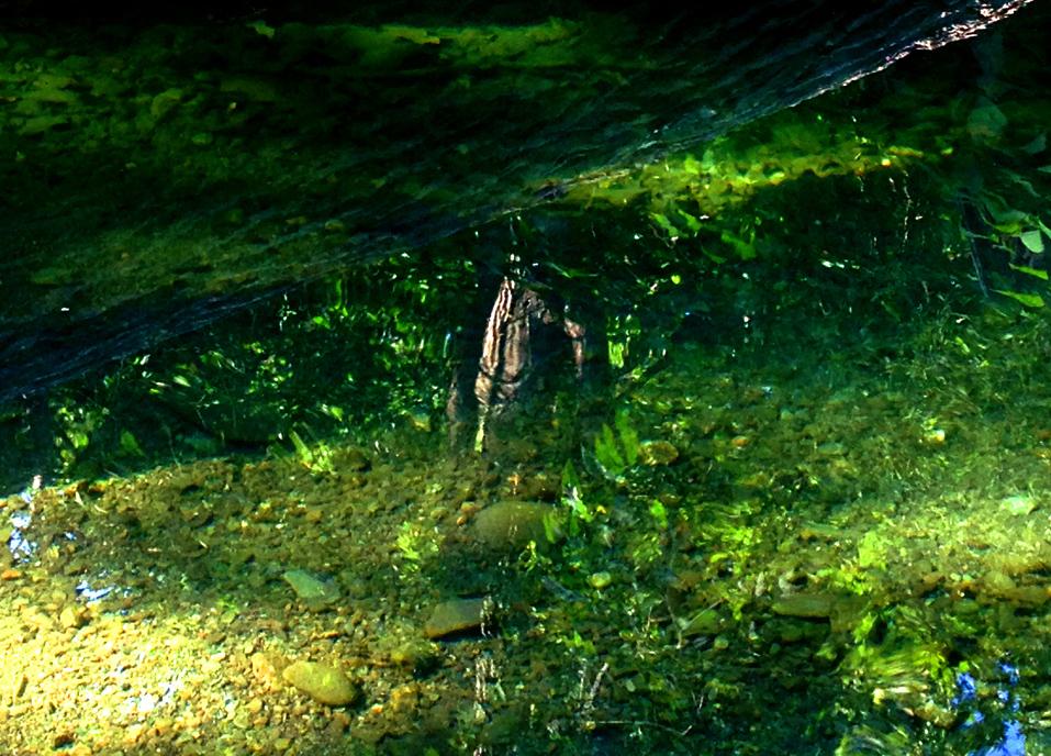 emeraldcreek1.jpg