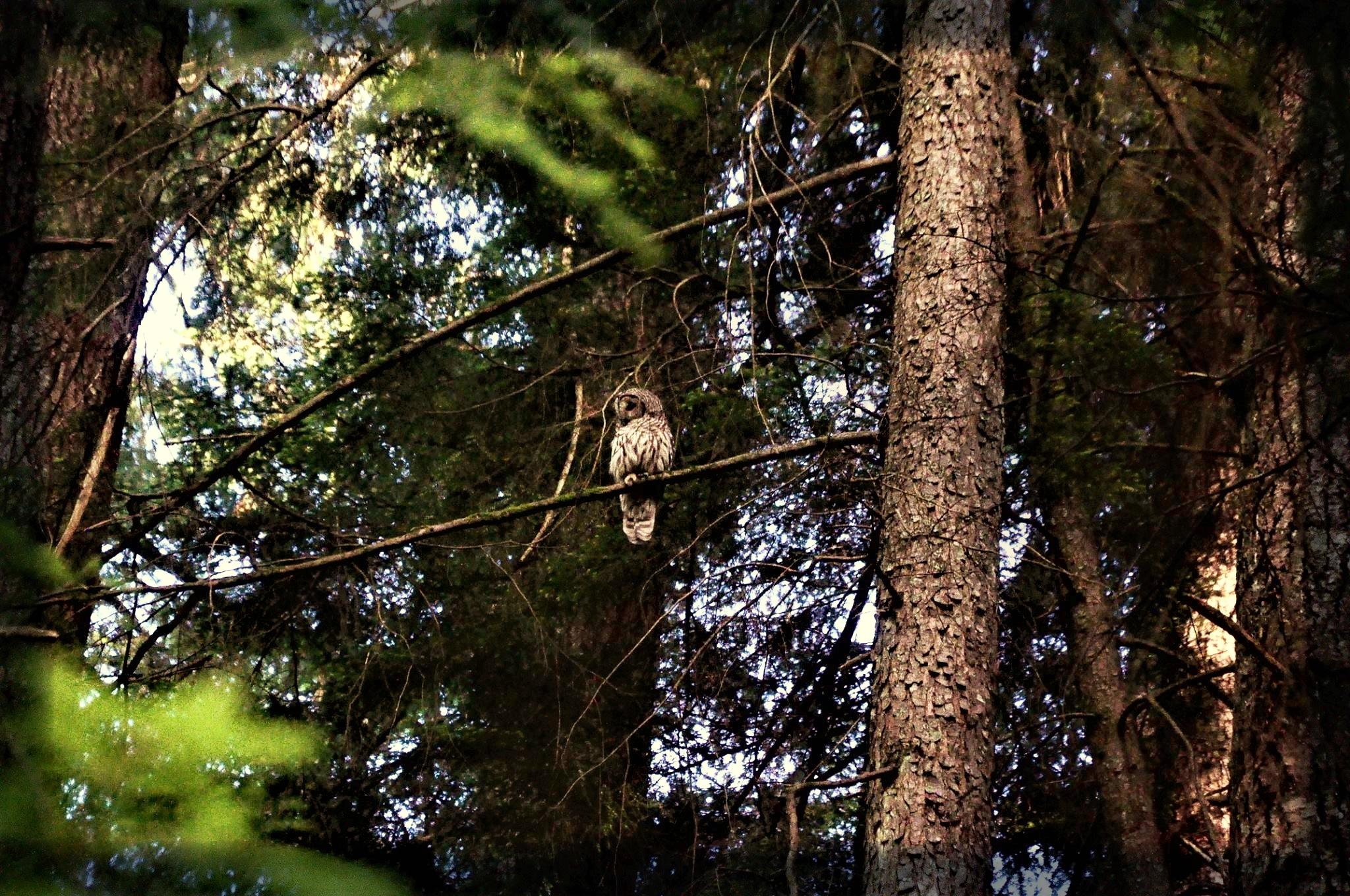 Creating Wildlife Habitat