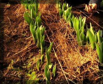 Planting Days