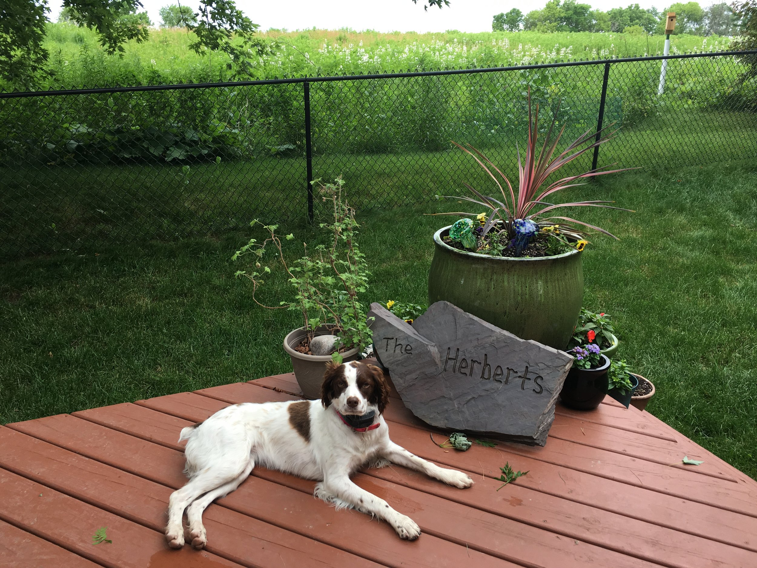 juneau loves our yard