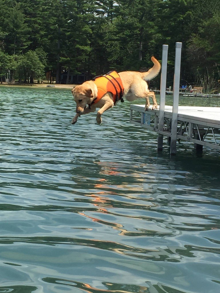 """This is our dog, Jack. His first attempt at fishing up at our family's lake house in wild rose. his fishing """"skills"""" amuse lake-goers every summer. he's much better with children than fish."""