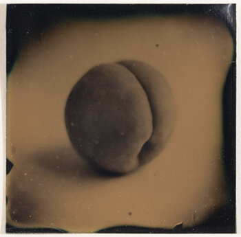 SUSAN SEUBERT    Apricot,  2003   Tintype 2 x 2 inches Edition #6/20, signed Retail framed: $650 © Susan Seubert; courtesy G. Gibson Gallery     Learn More