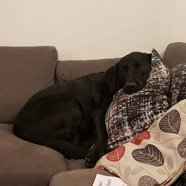 My dog. He actually arranged those cushions.