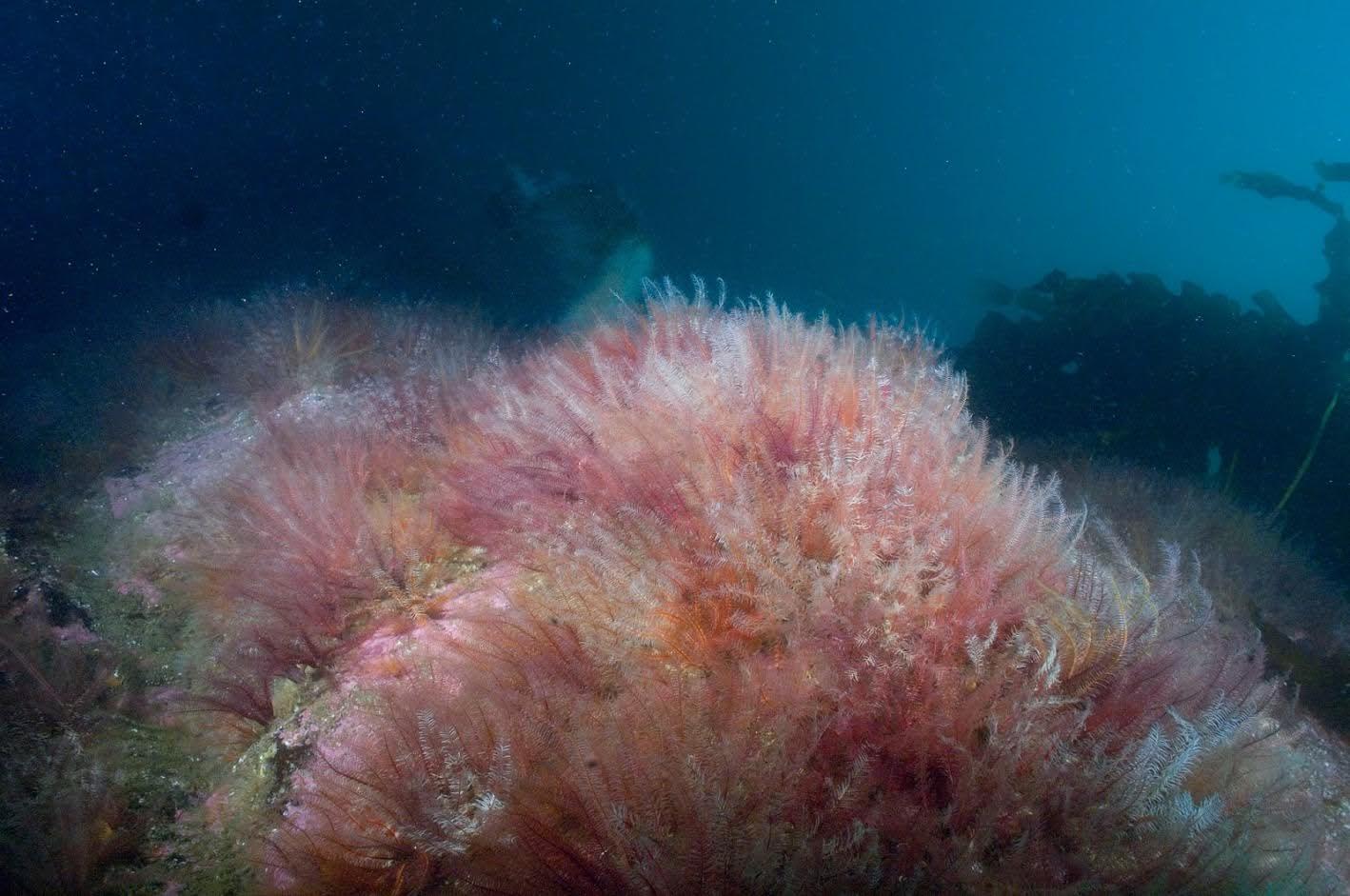 Sea-2.jpg