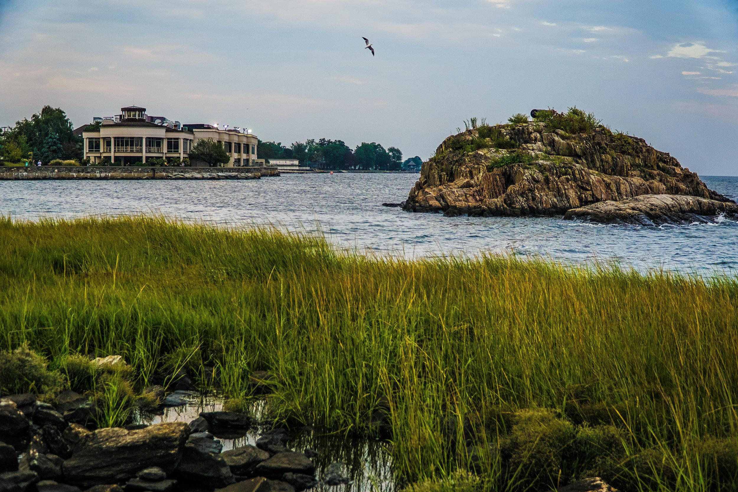 seagull at glen island.jpg