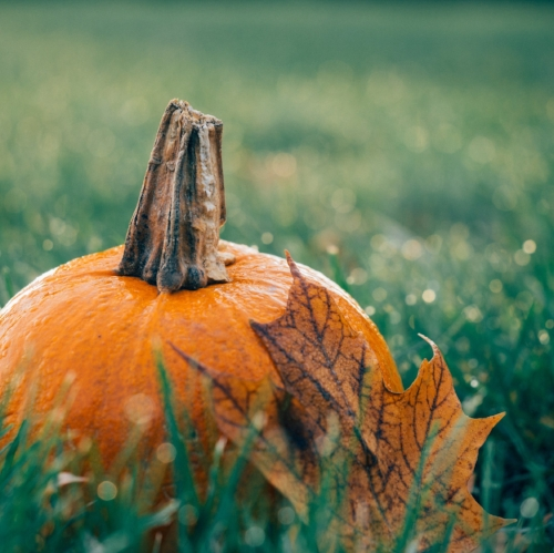 harvest happenings, october 12 - Fun-filled day where families take the opportunity to celebrate Thanksgiving and get involved with our Harvest Festivities. This event is accompanied by hay wagon rides, pumpkin painting, face painting and a harvest treat table.