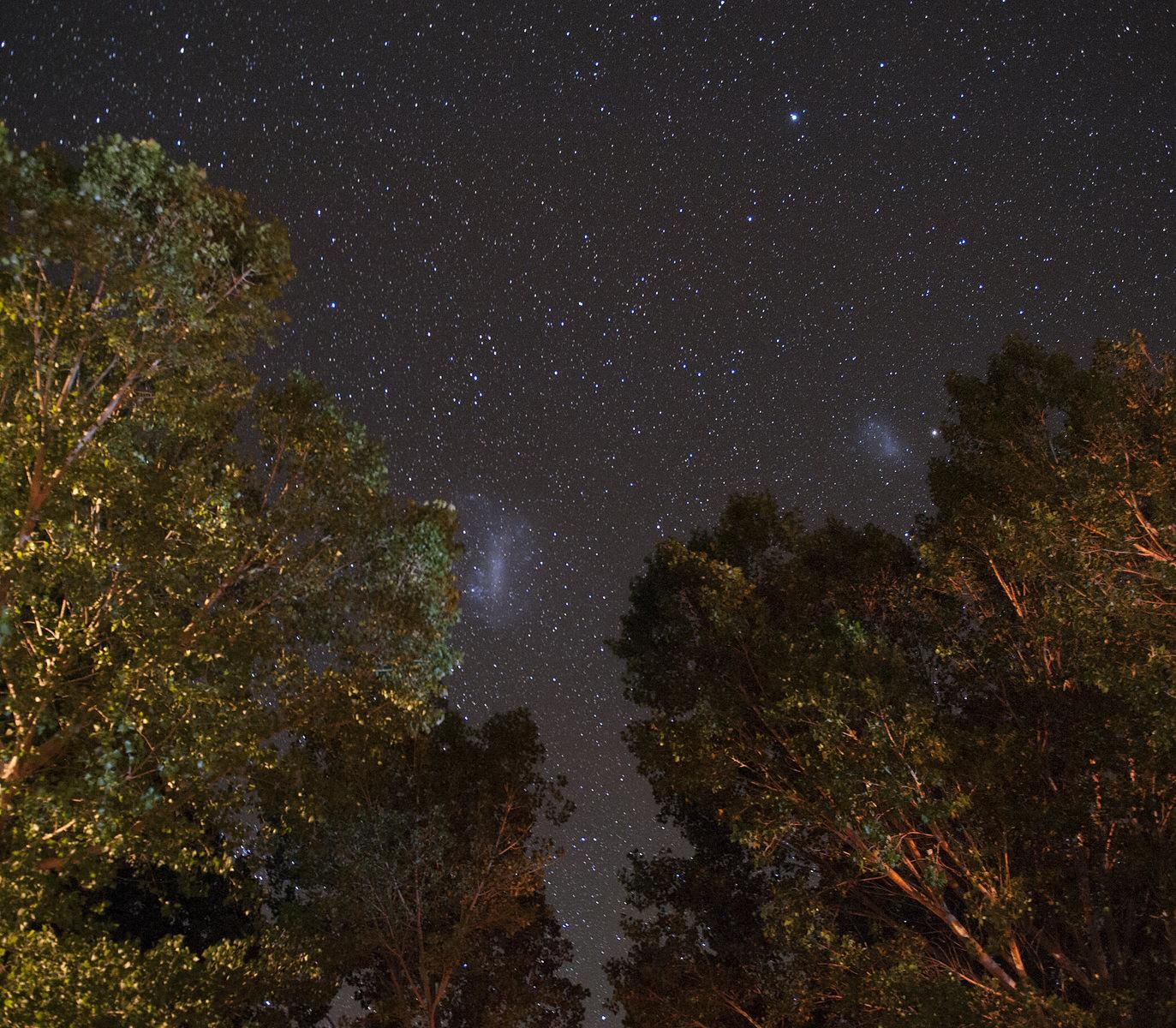 Starry night sky above the trees, Karoo, South Africa_photo by Heine Wieben Rasmussen, Bliss & Stars.jpg