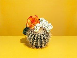 cadmium_scent-home-fragrance-subscription-service-1.jpg