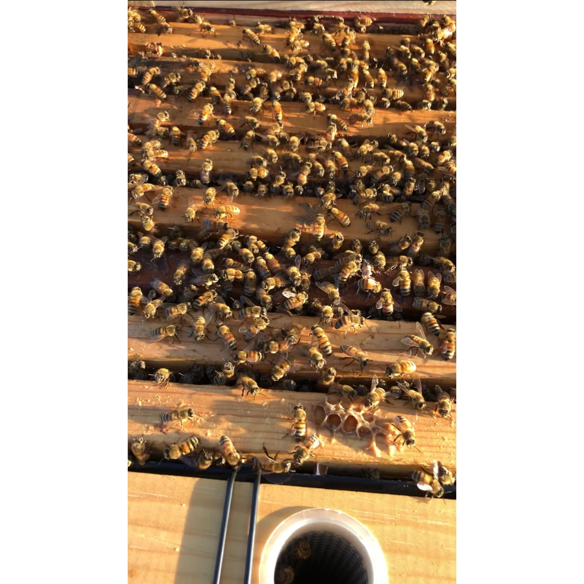Bees Close Up.JPG