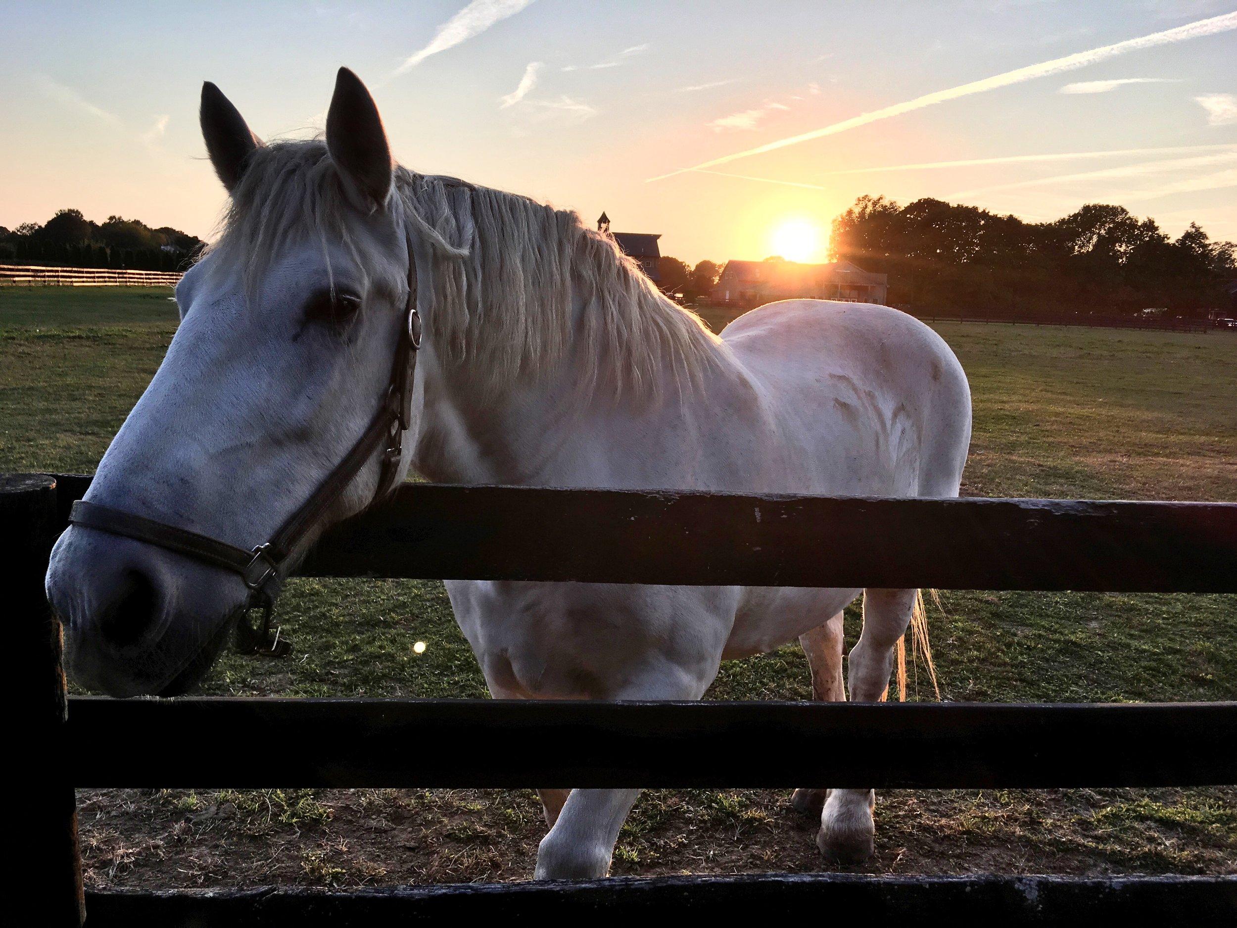 Horse at Sunset (Martha Clara Vineyards)