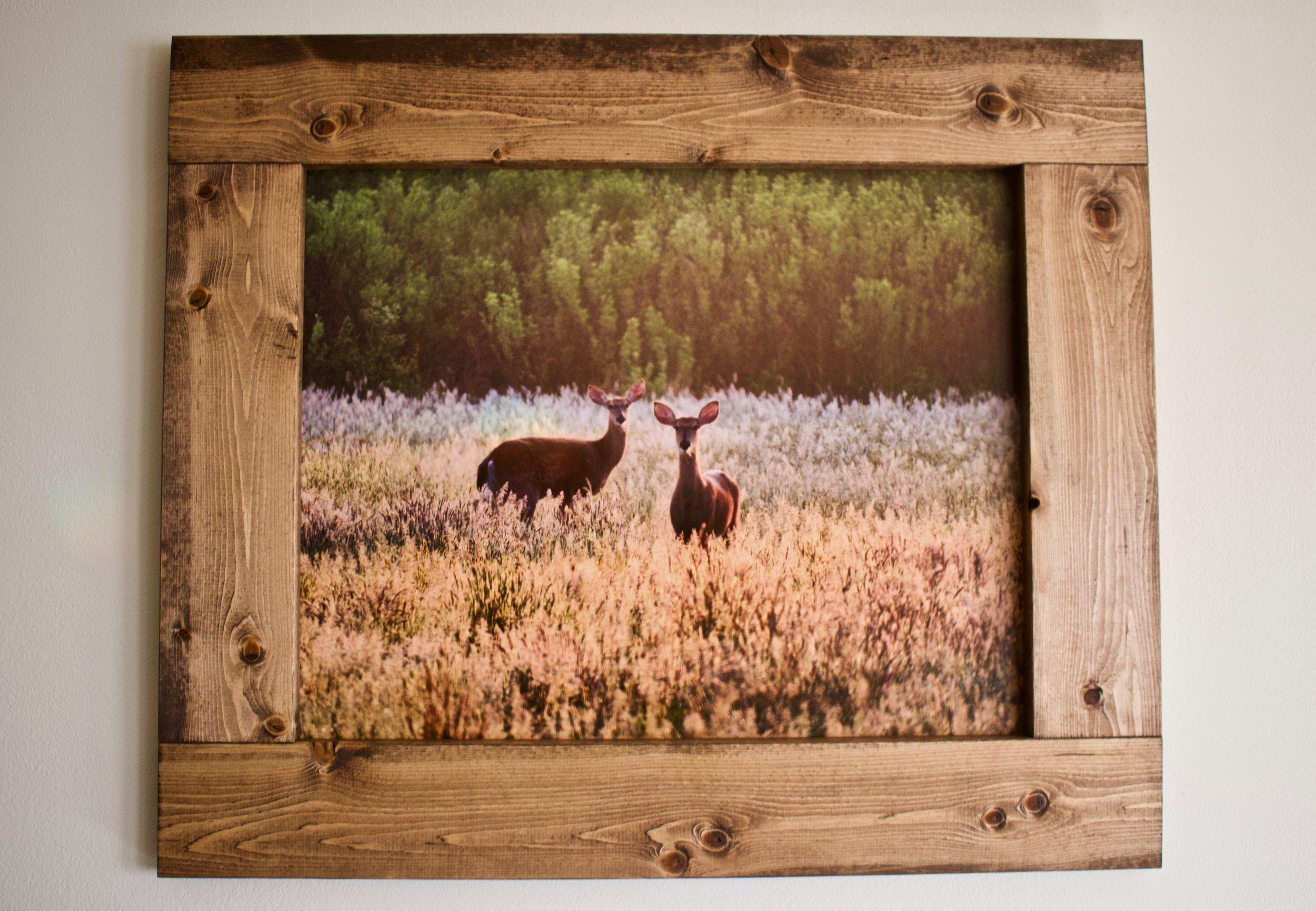 Deer @ Old Field 2 (October 2018)