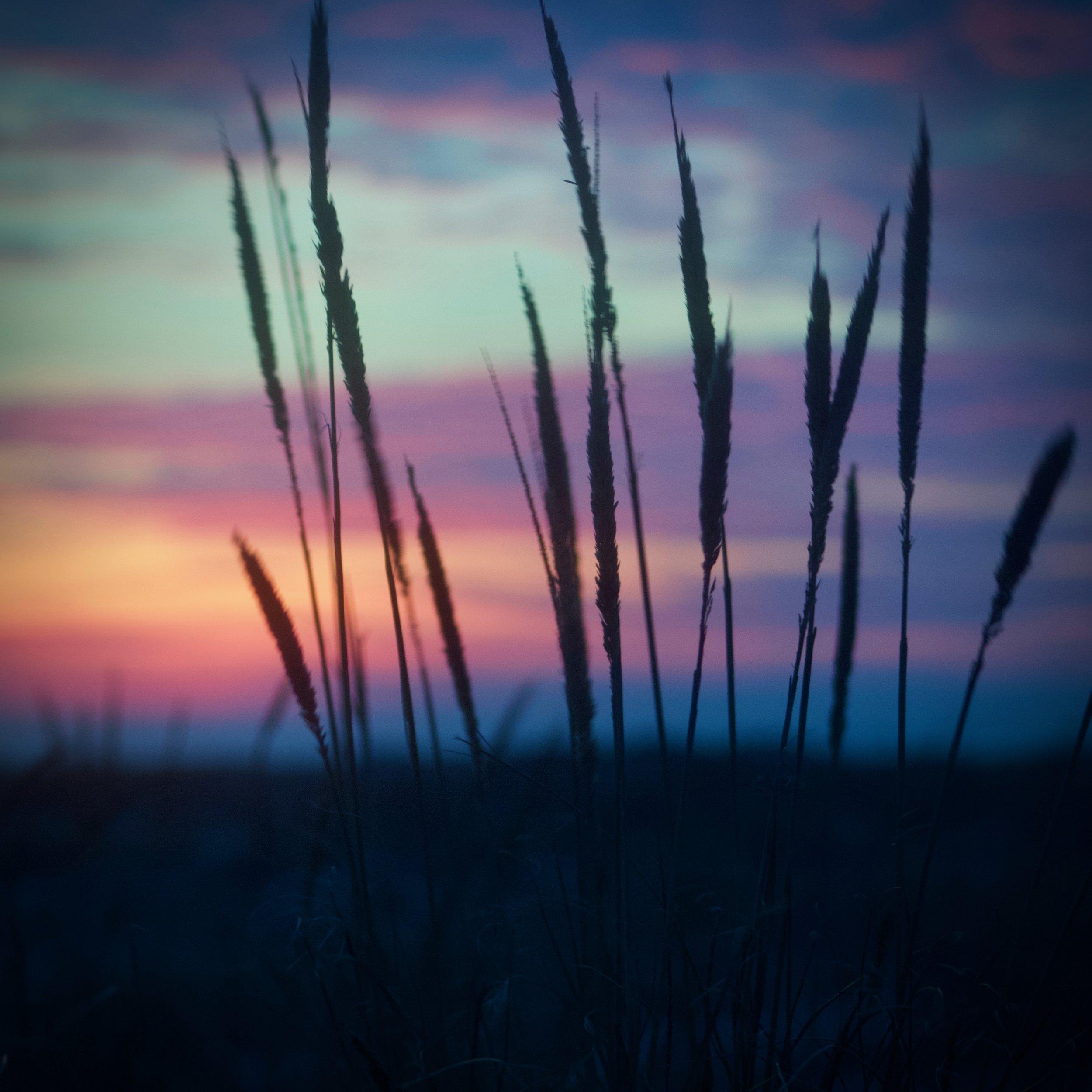 Phragmites Sunset @ Jones Beach State Park